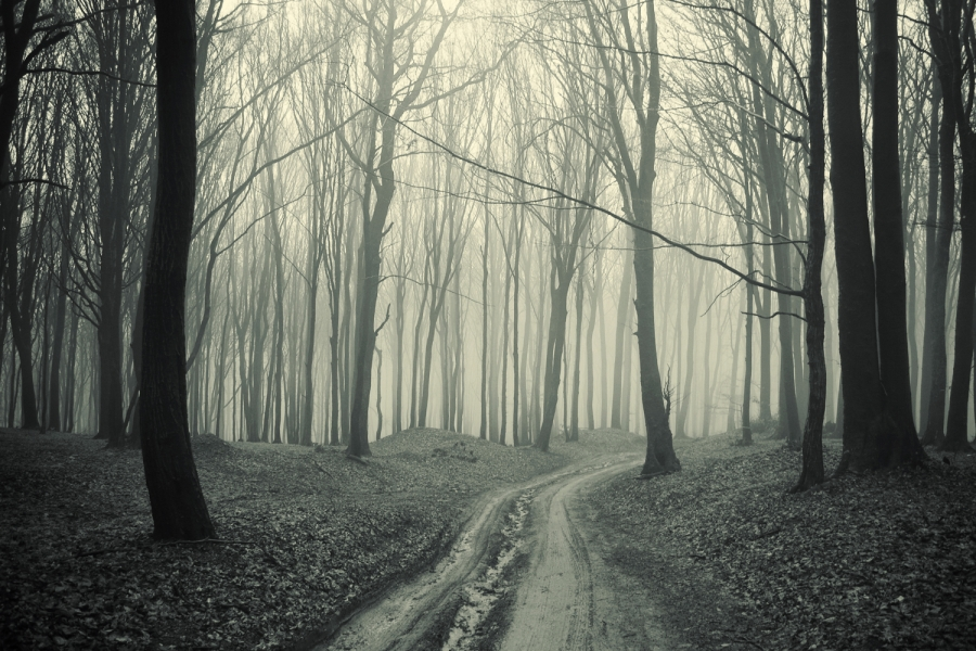47 Black And White Forest Wallpaper On Wallpapersafari