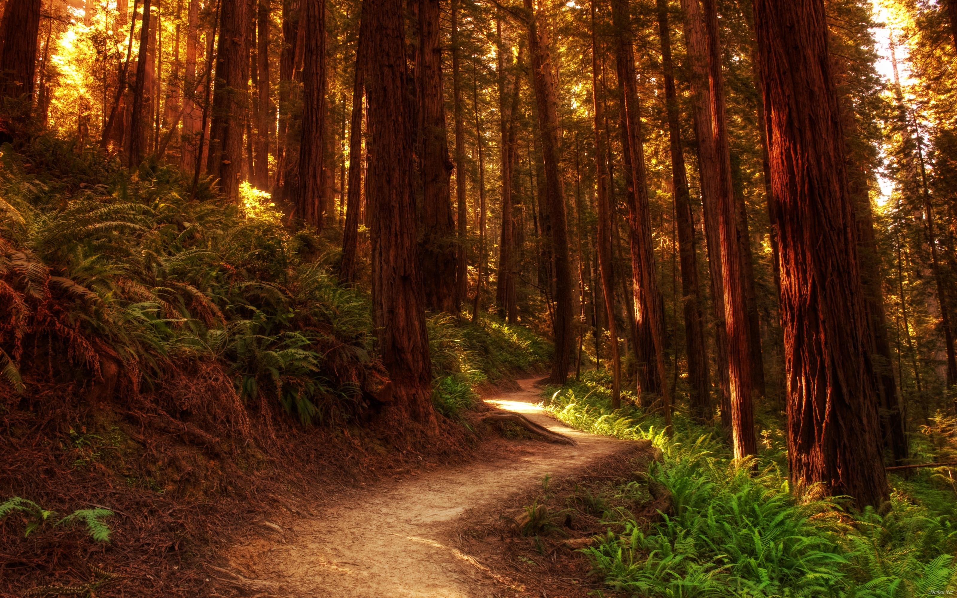 Beautiful forest landscape HD Desktop Wallpaper HD Desktop Wallpaper 3200x2000