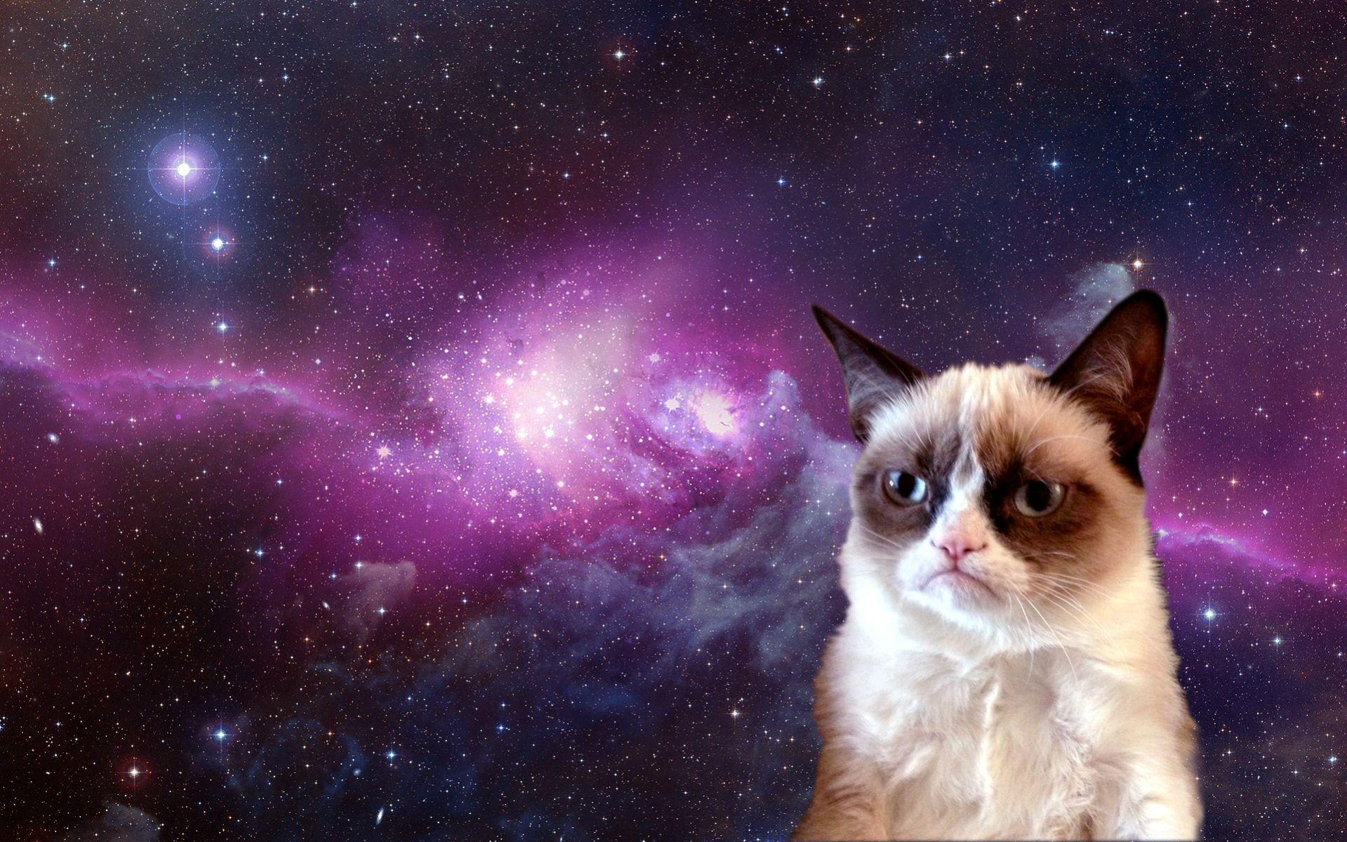 Grumpy Cat in Space HD Wallpaper for Desktop 1919x1199