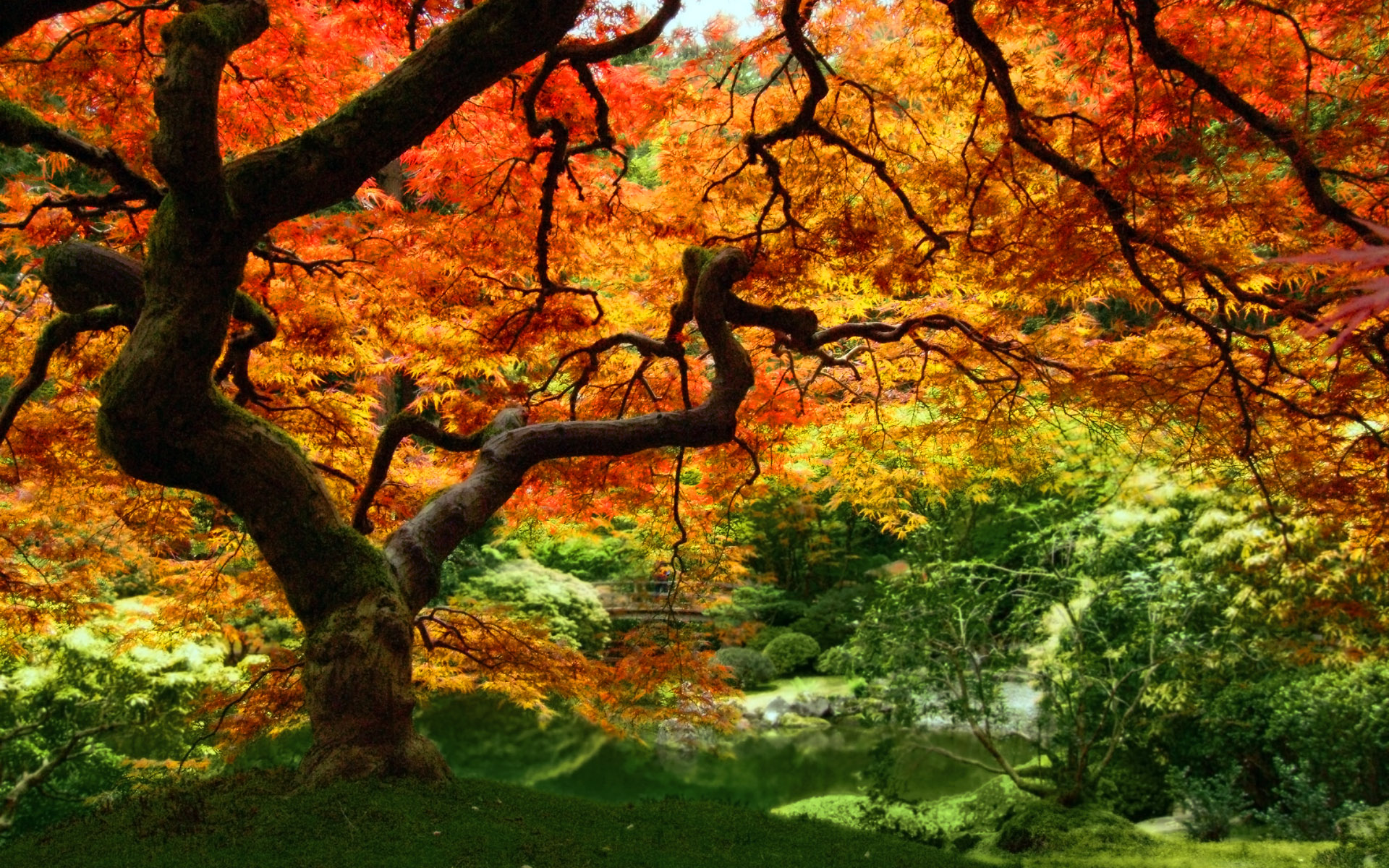 autumn leaves forest trees 1920x1200