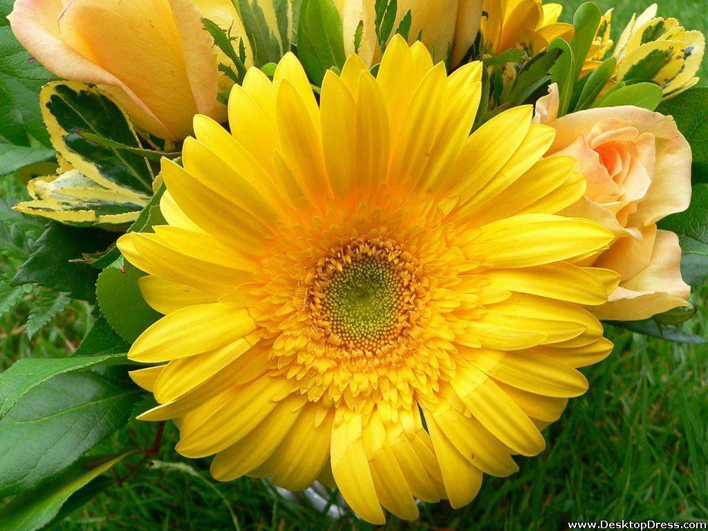 Desktop Wallpapers Flowers Backgrounds Big Yellow Flower www 1024x768