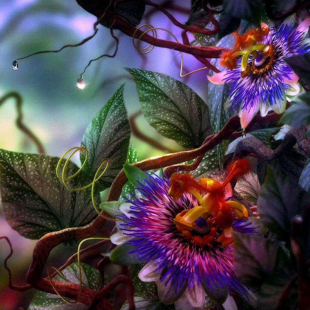 Exotic flowers iPad Backgrounds Best iPad Wallpaper Wallpaper 1024x1024