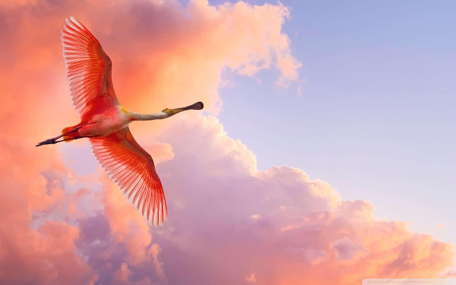 Beautiful Birds Flying 4K HD Desktop Wallpaper for 4K Ultra HD 1920x1200