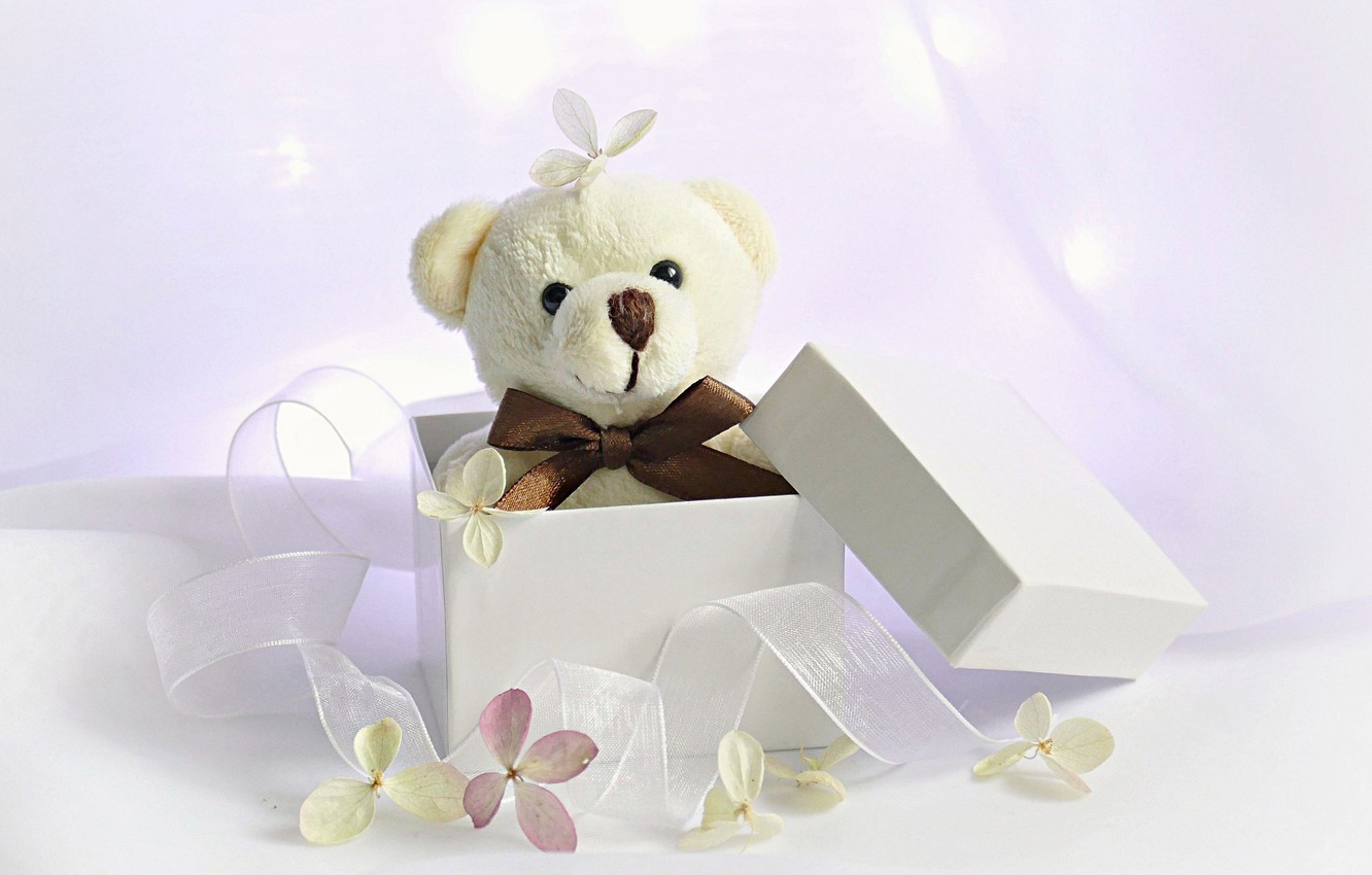 Wallpaper background box gift toy tape bear flowers Teddy 1332x850