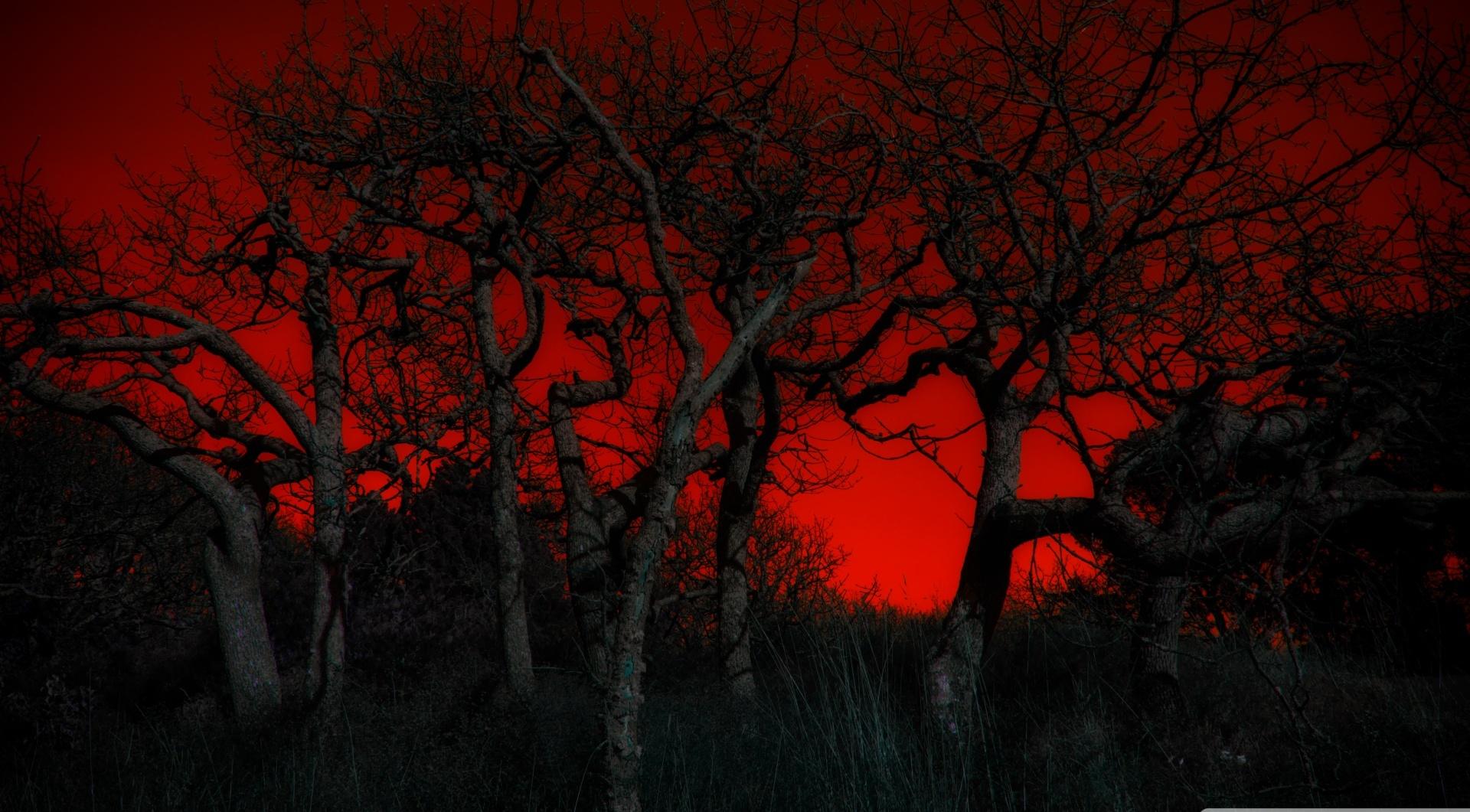 [77+] Hd Red Wallpaper on WallpaperSafari