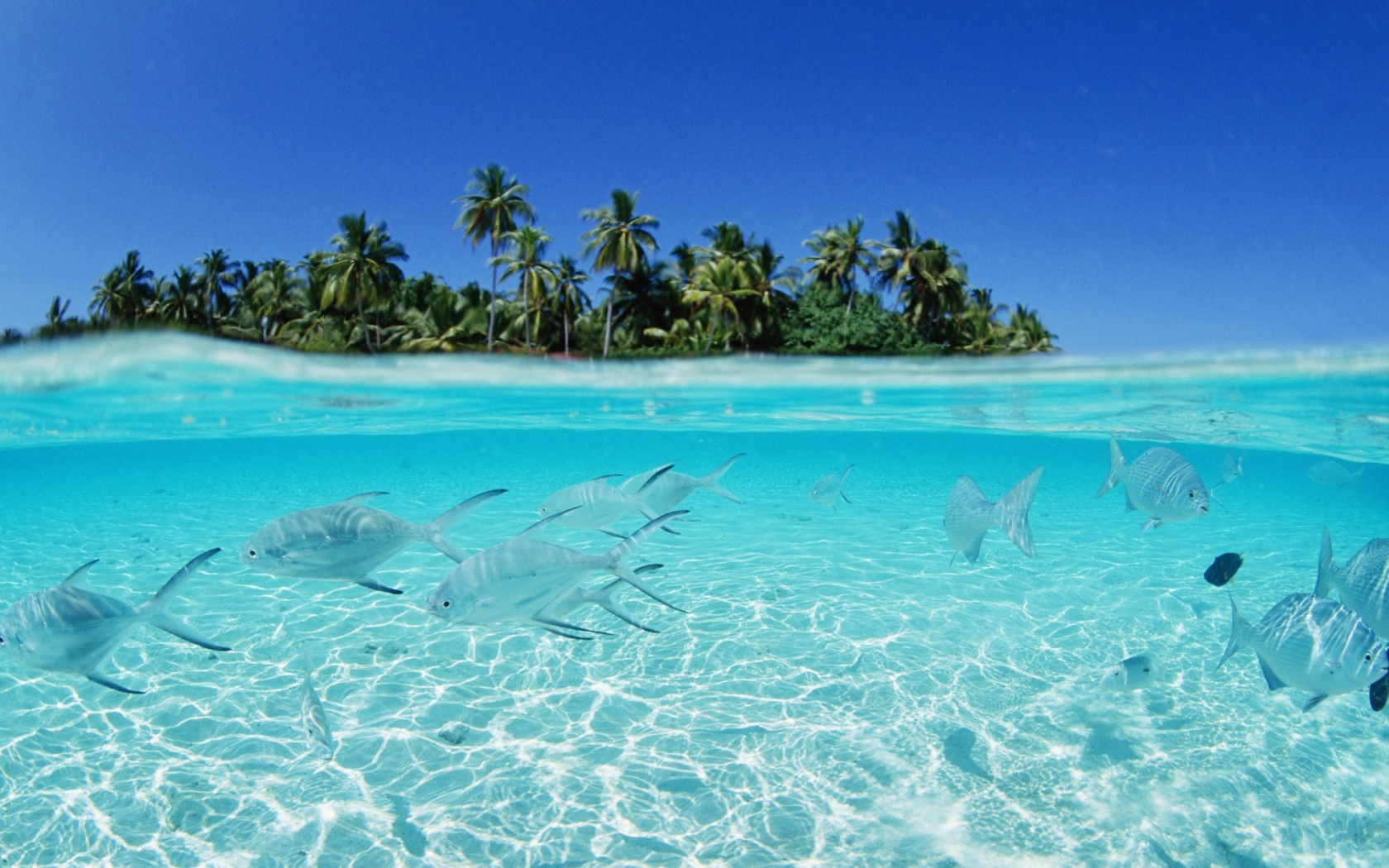 Free download Maldives beach fish wallpapers [1680x1050] for your