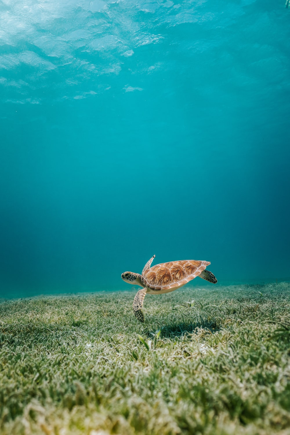 100 Sea Turtle Pictures Download Images on Unsplash 1000x1499