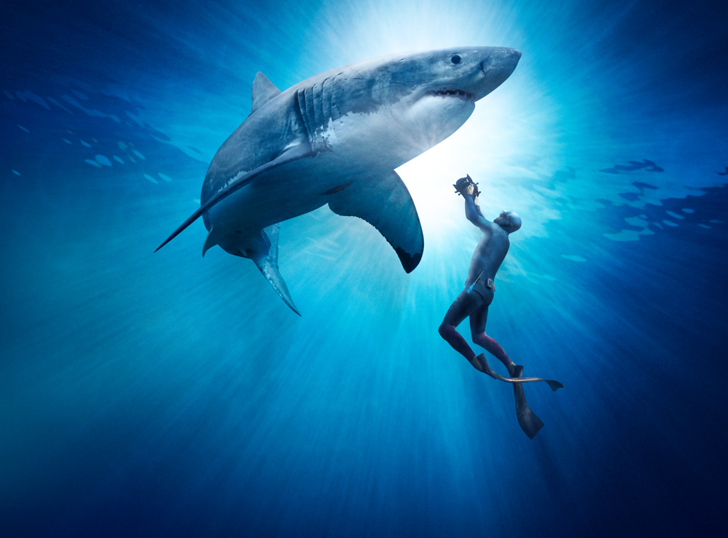essays on great white sharks Great white has 18 ratings and 3 reviews umachan said: gorgeous photo essay  of great white sharks off the coast of south africa the images of the white.