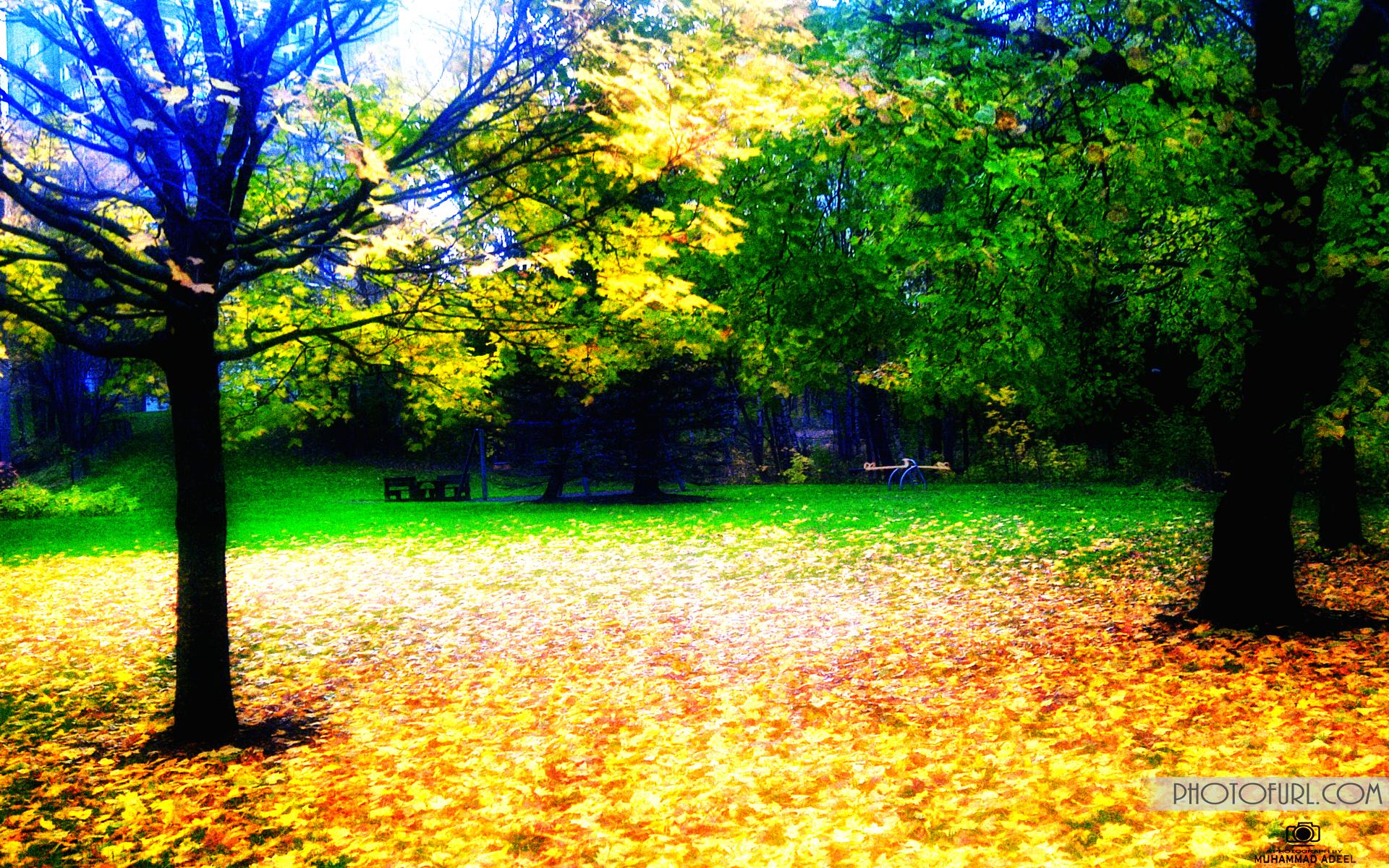 desktop wallpapers nature wallpaper photo beautiful photographic 1920x1200
