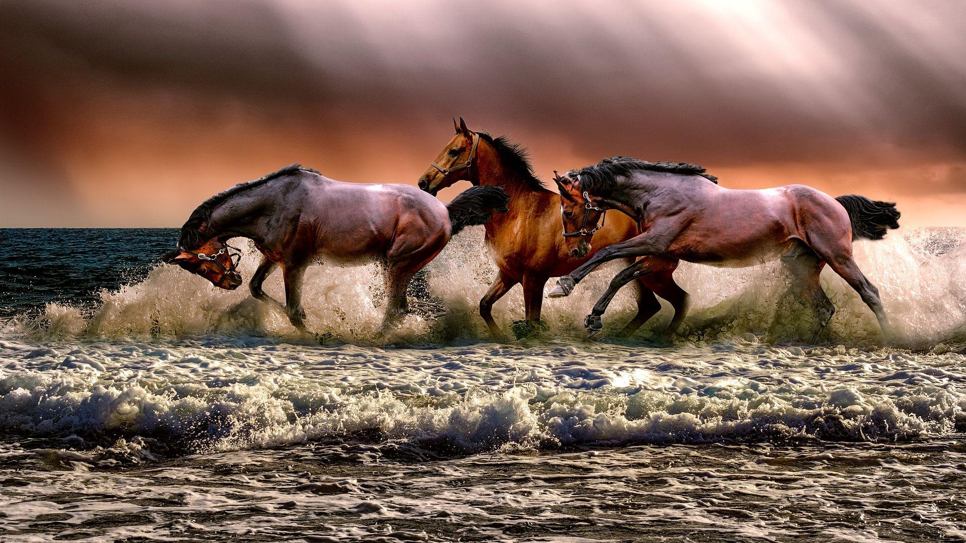 38 Cavalry Wallpaper On Wallpapersafari