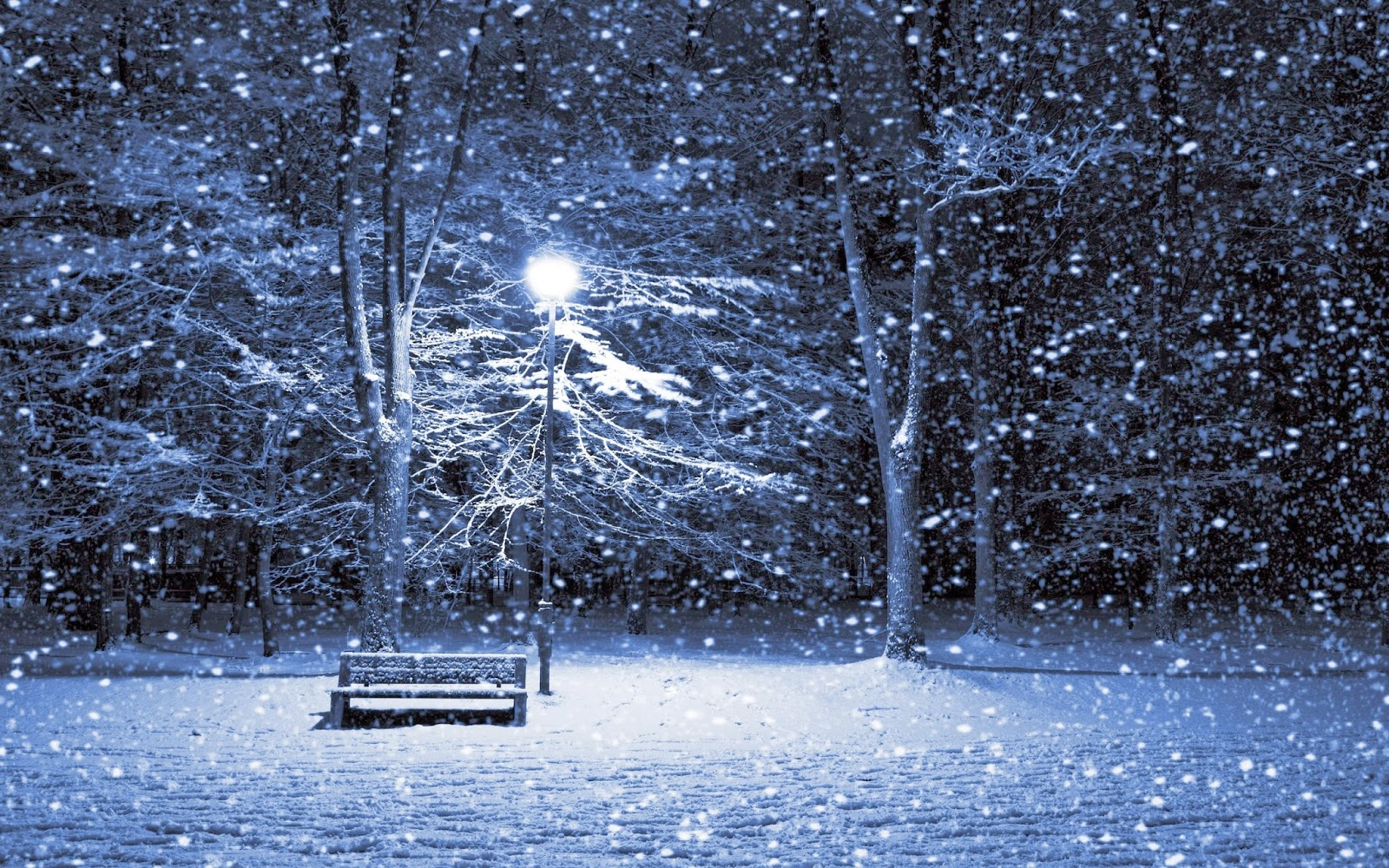 Winter Wallpaper 1600x1000