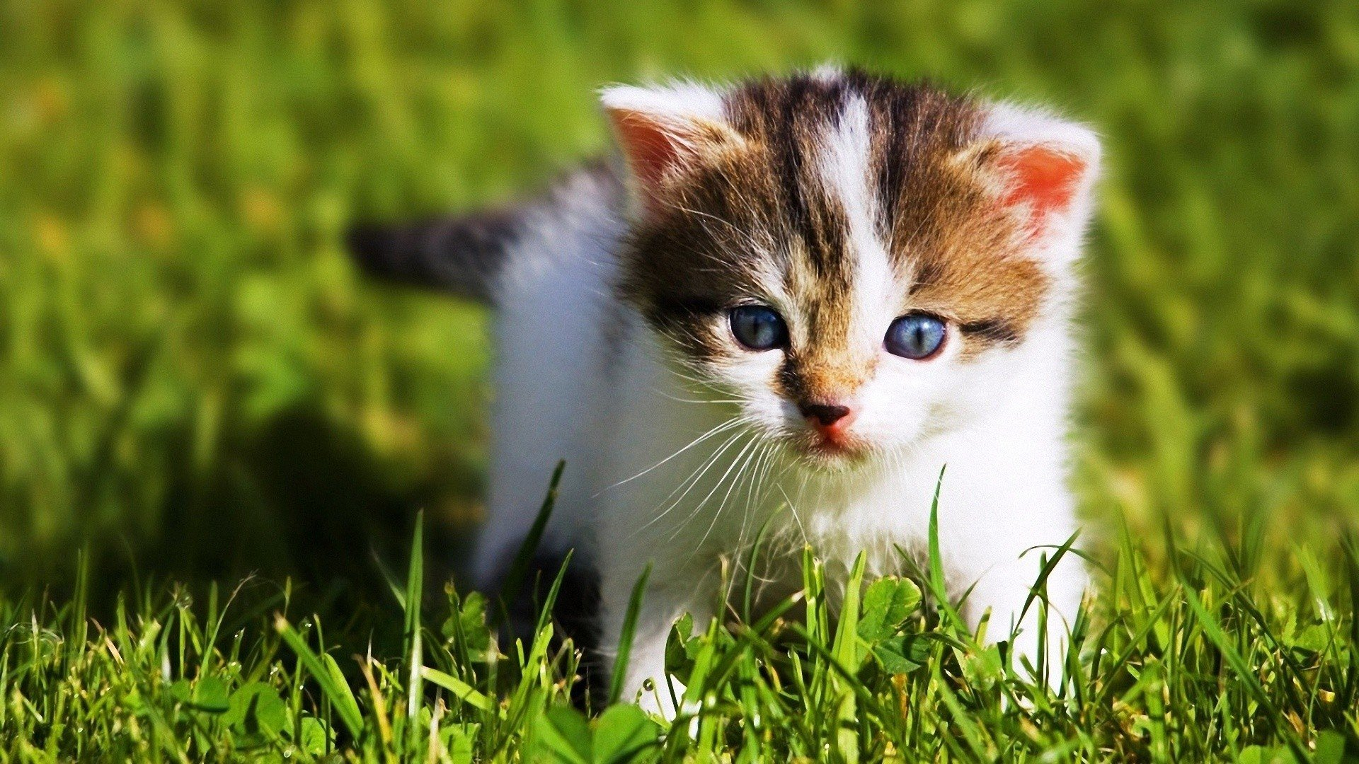 Download Cute Baby Animal Wallpapers 1920x1080