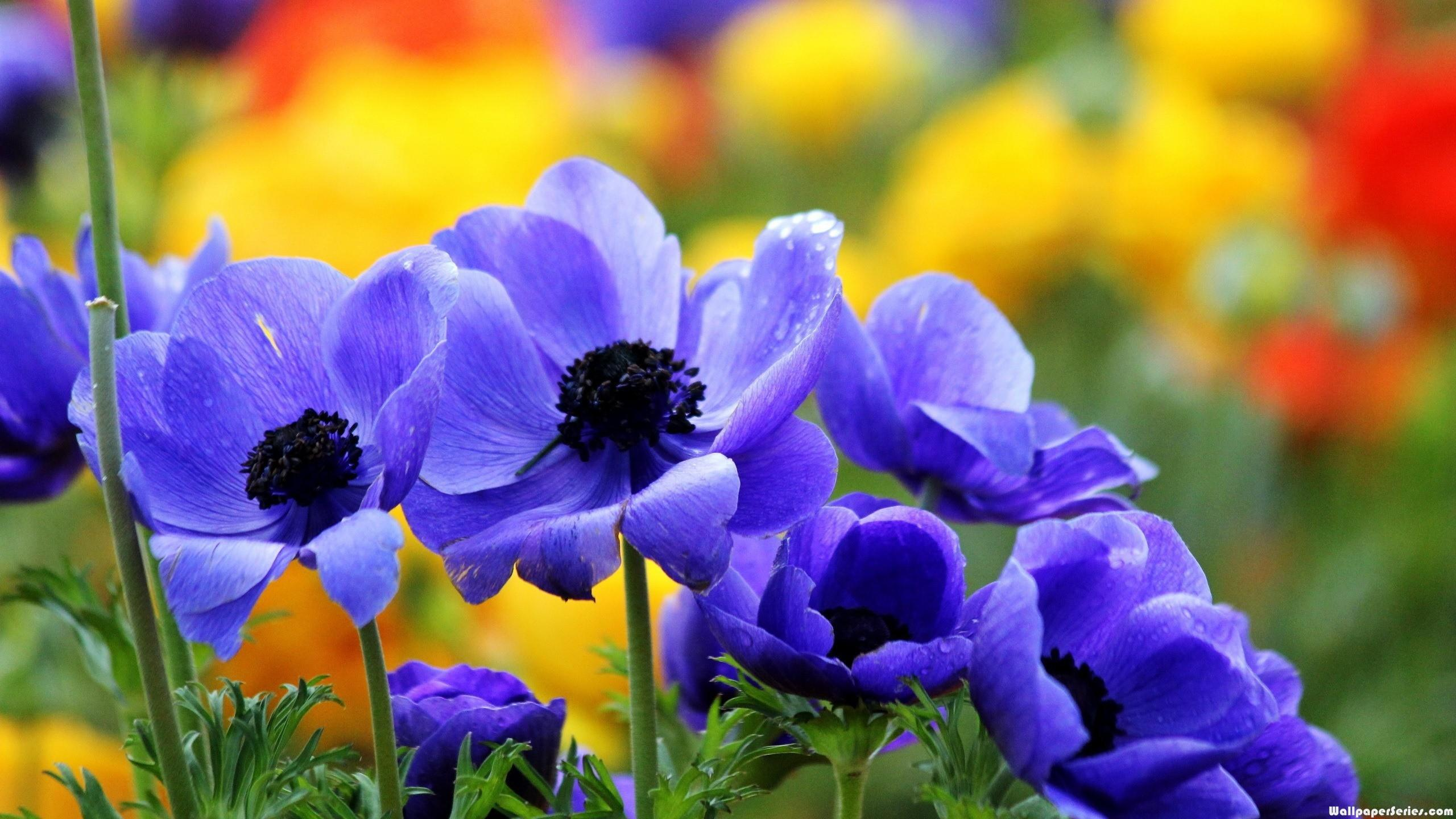 Wallpaper download full screen - Hd Pretty Flowers Fullscreen Wallpaper Download Free 140707