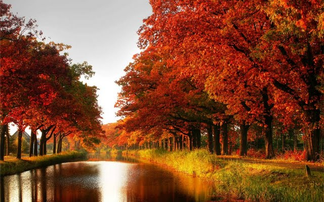 High resolution Autumn Colors desktoplaptop wallaper Listed in alley 640x400