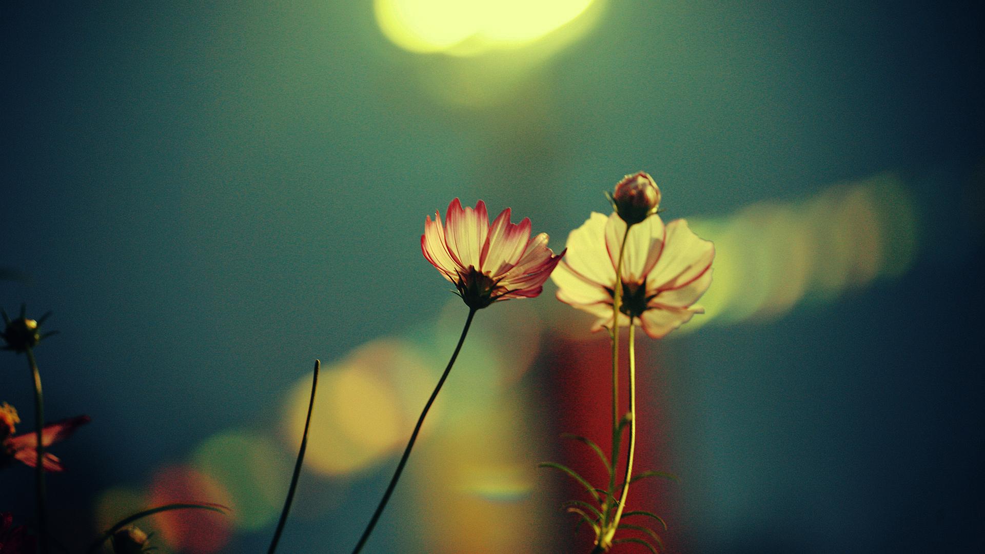 25 Beautiful Flowers Full HD Wallpapers 1920X1080 1920x1080