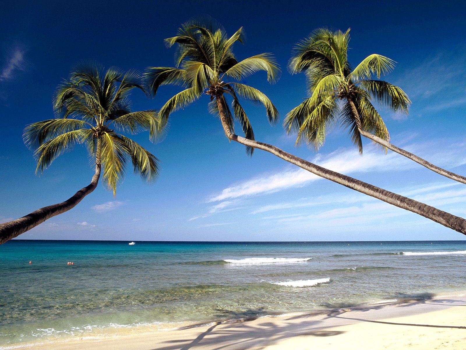 Caribbean beach wallpaper The Images 1600x1200