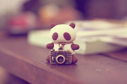 adorable camera cute dream panda photo random teddy traveling 500x333