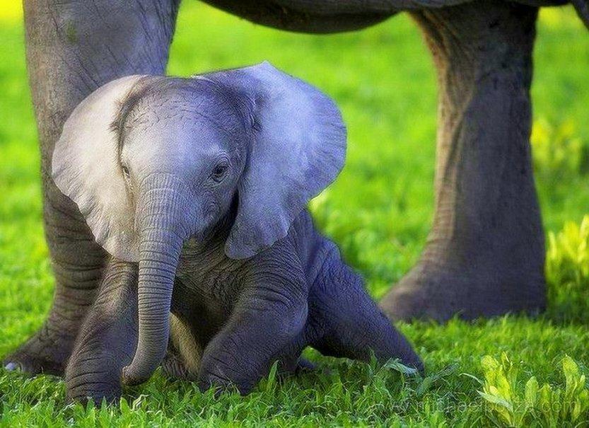cute elephant wallpaper wallpapersafari