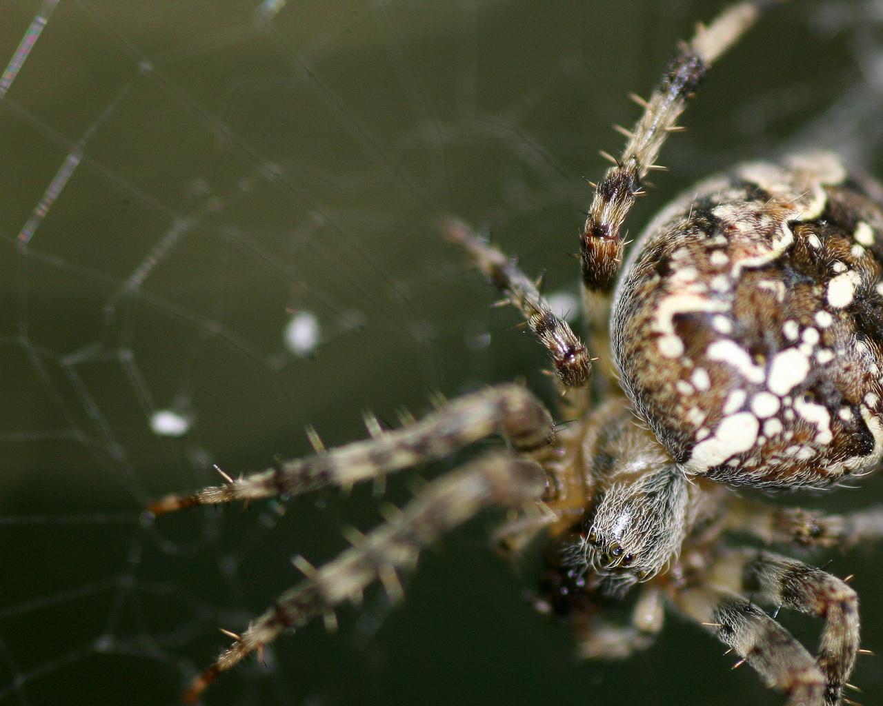 Huge Spider Google Themes Huge Spider Google Wallpapers Huge Spider 1280x1024
