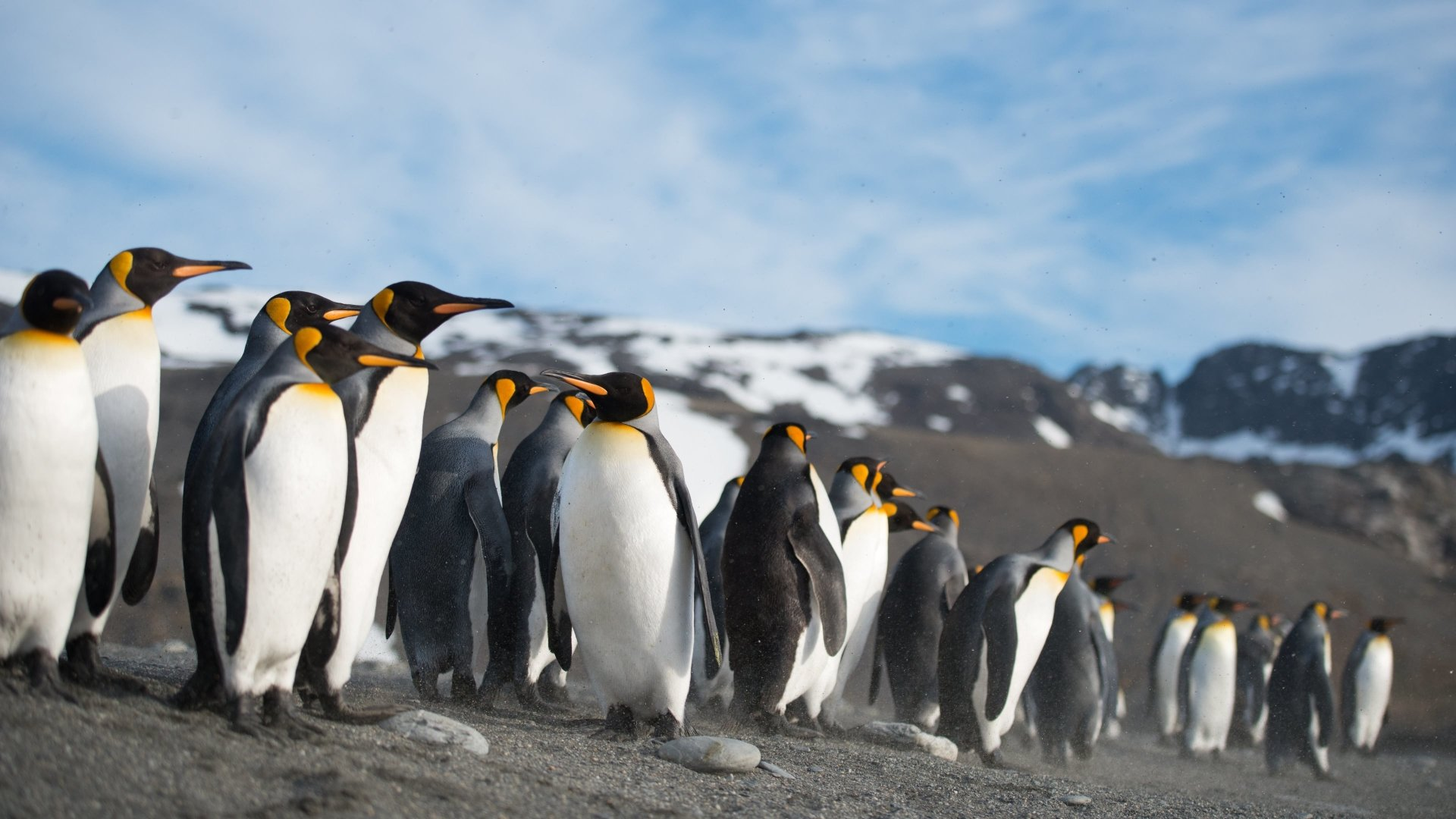 16 4K Ultra HD Penguin Wallpapers Background Images   Wallpaper 1920x1080