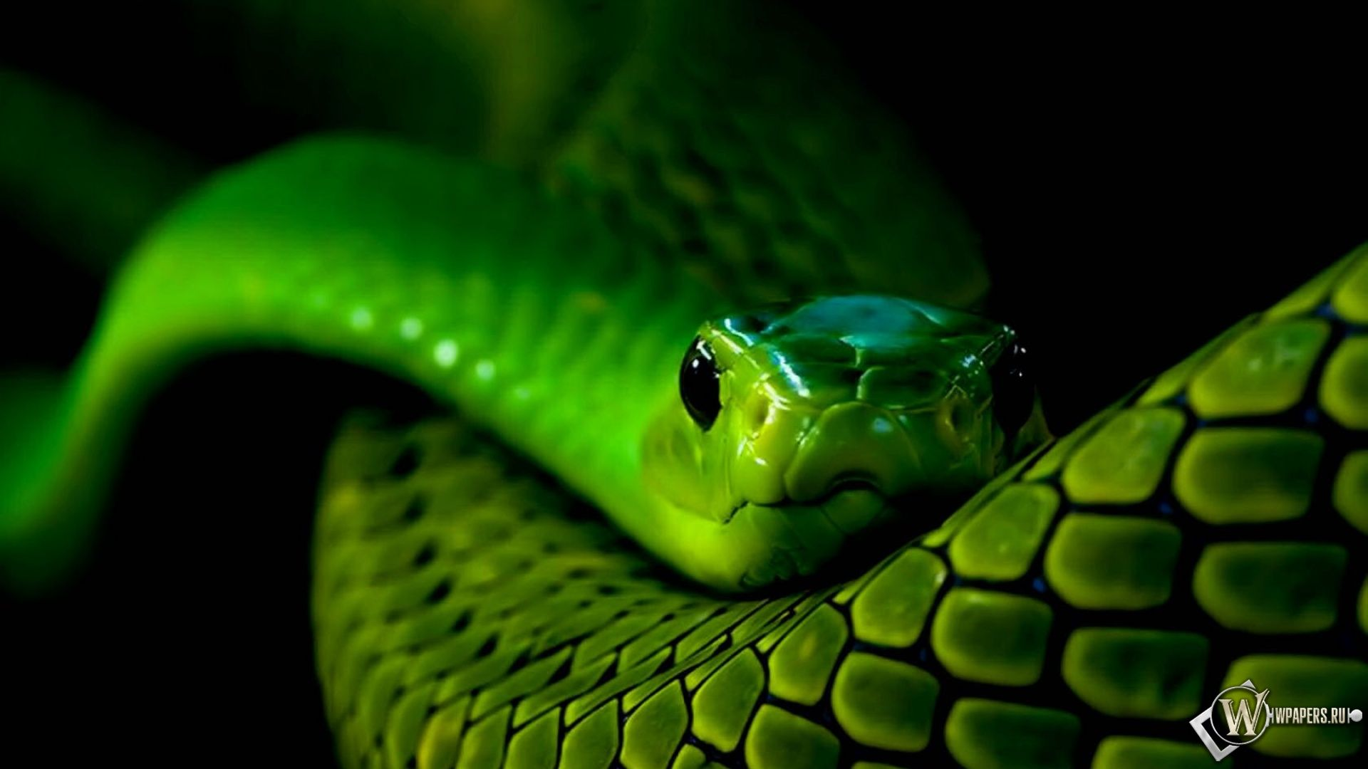 Wallpapers Neon Snake D Hd 1680x1050 246475 neon snake 1920x1080