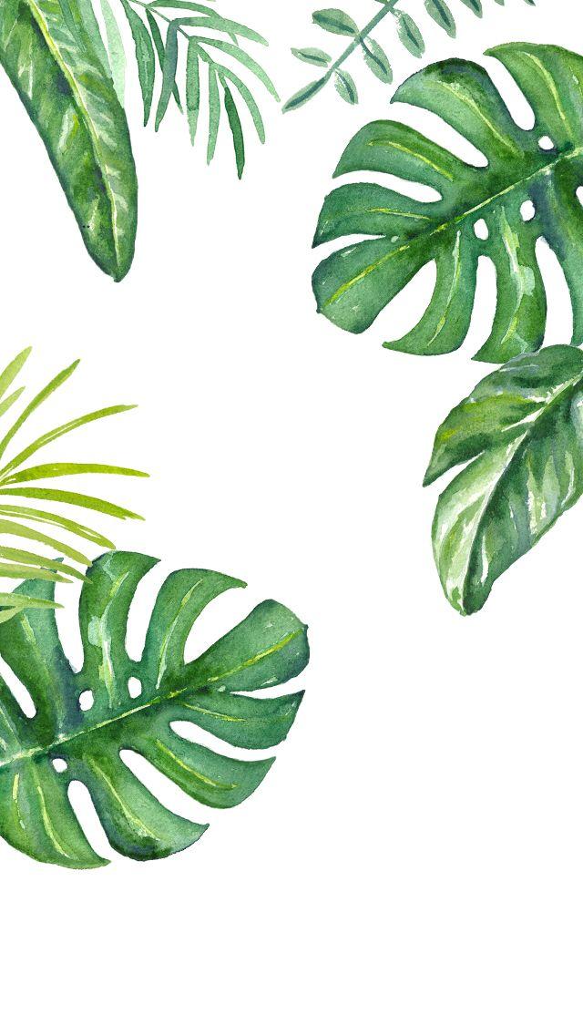 Plants watercolour iPhone wallpaper Plant wallpaper Plant 640x1136