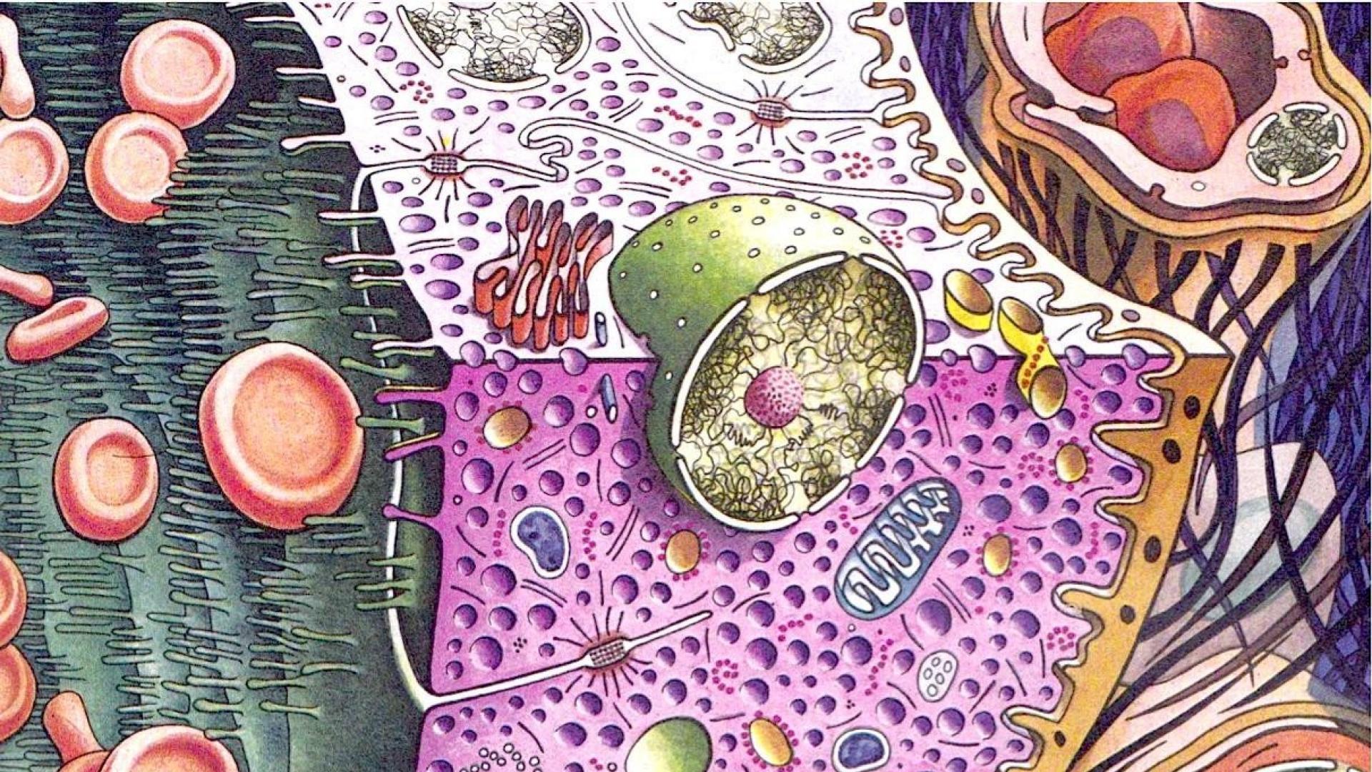Biology artwork cells science wallpaper 65849 1920x1080