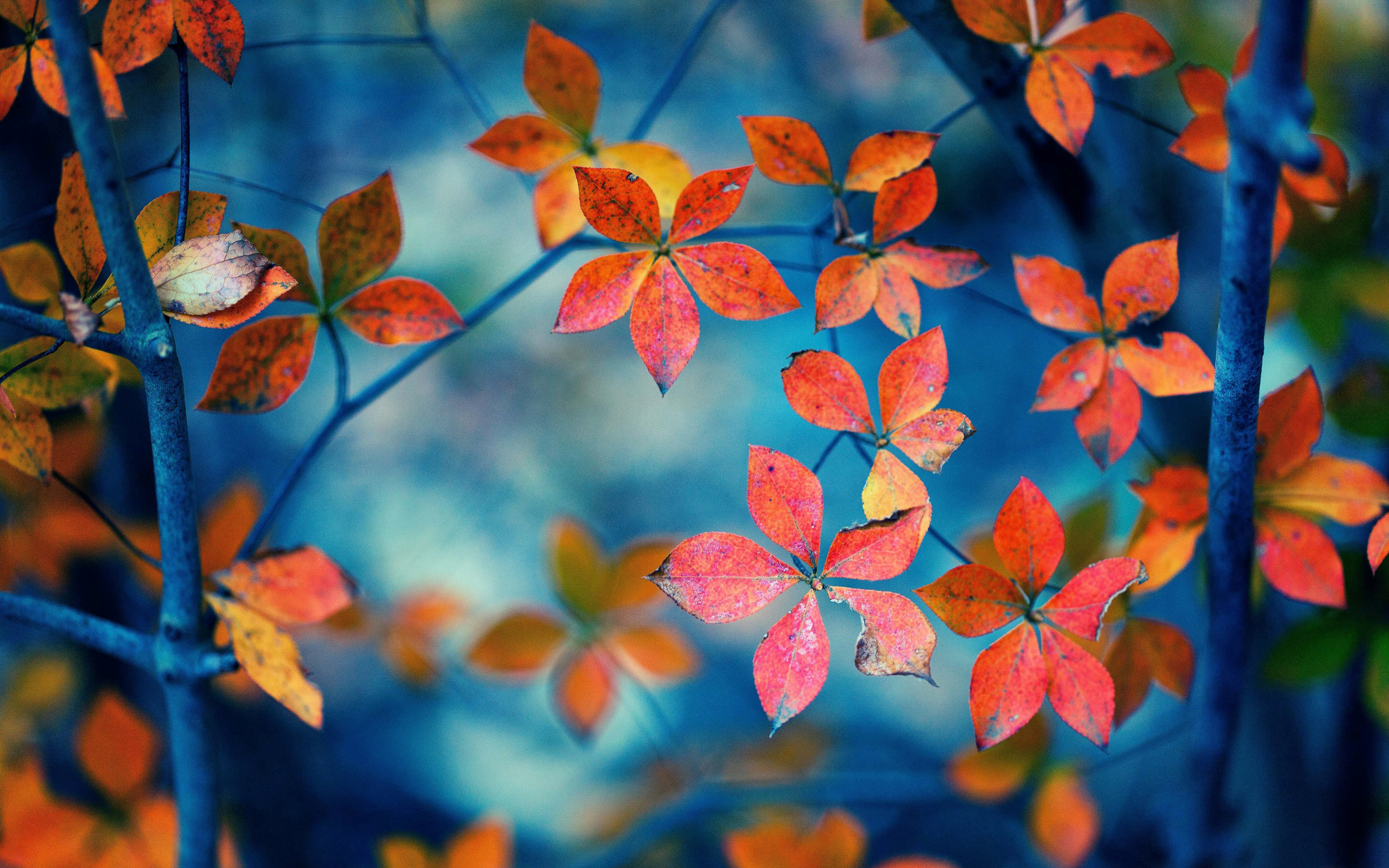 HD Fall Leaves Wallpaper - WallpaperSafari