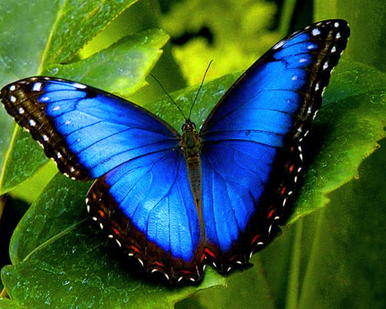 55 Colorful ButterflyHD Images Wallpapers Download 1280x1024