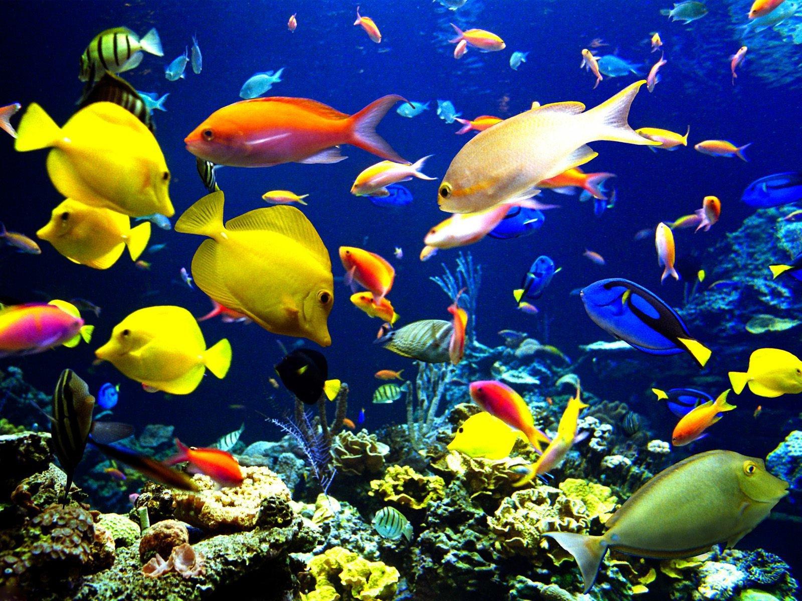 underwater fish wallpaper wallpapersafari