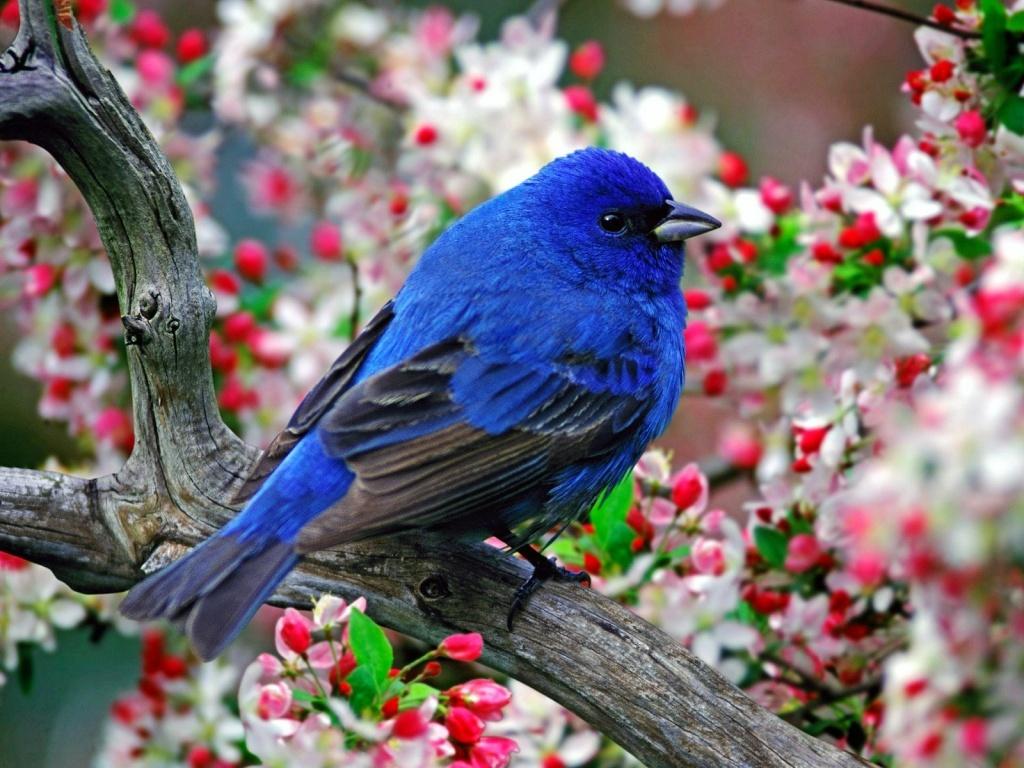 SUN SHINES Beautiful Blue Bird Wallpaper 1024x768
