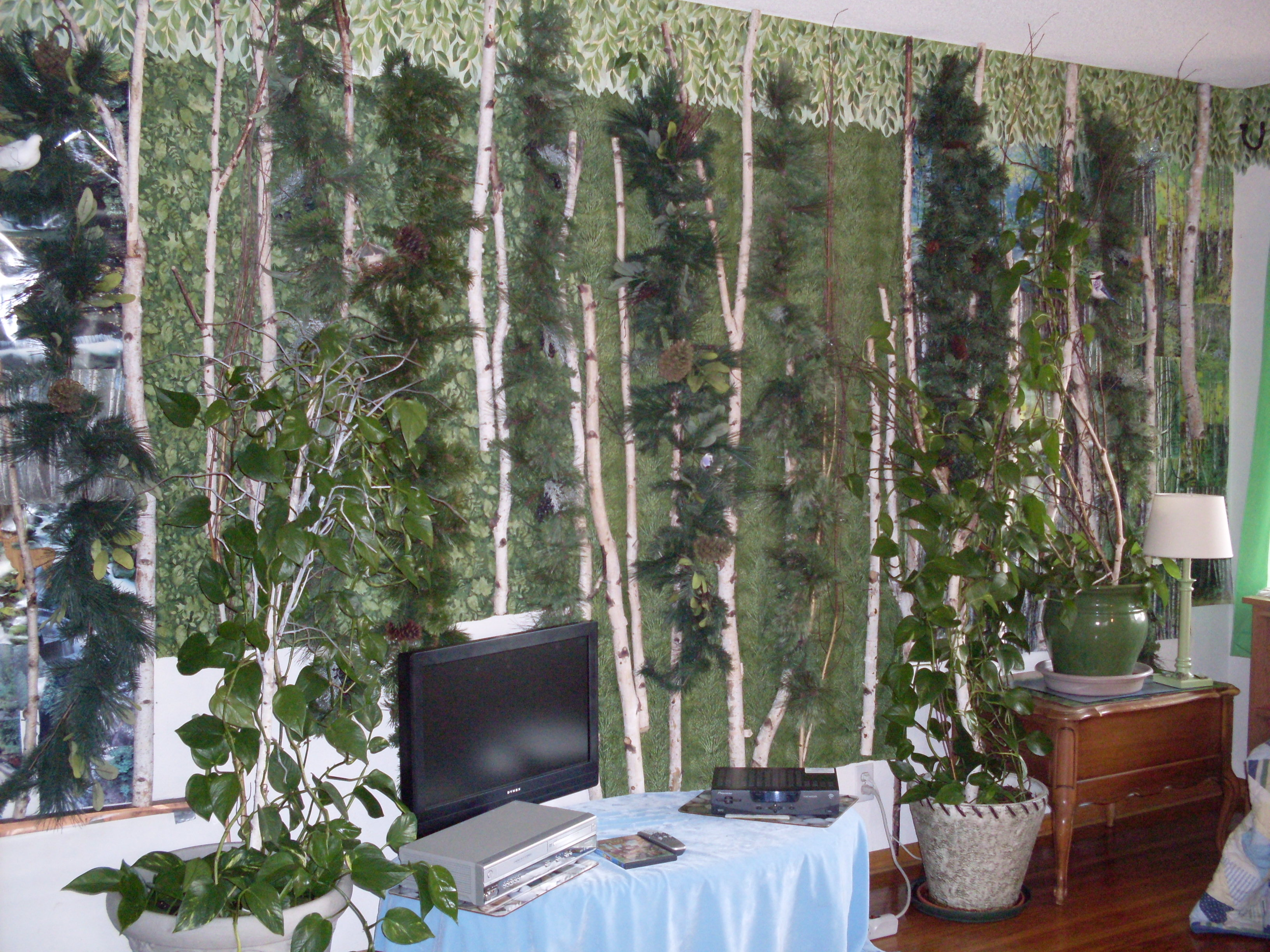 in living room mixed white birch coniferous forest dr melanie renfrew 3264x2448