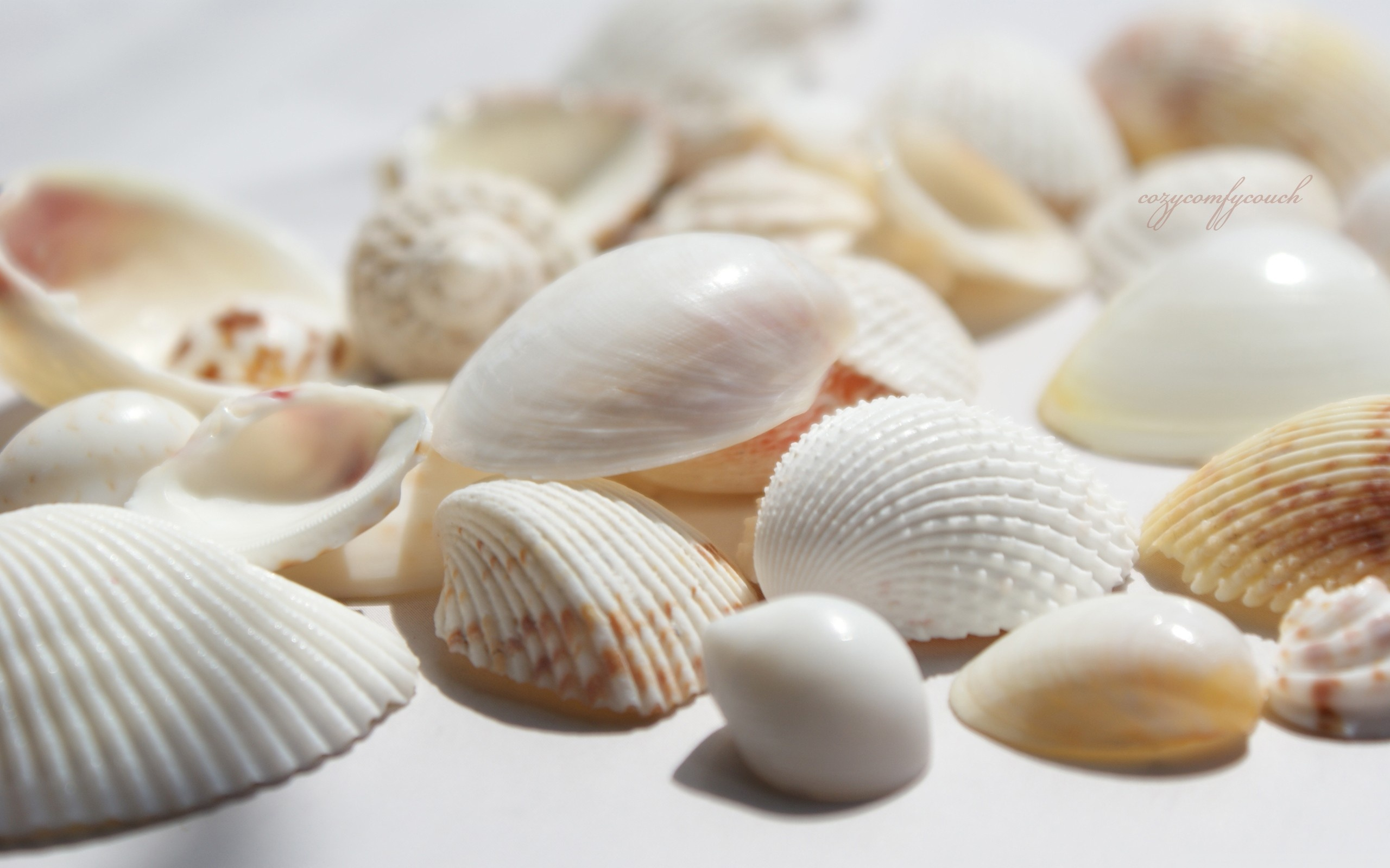 Seashells 4K HD Desktop Wallpaper for 4K Ultra HD TV Dual 2560x1600