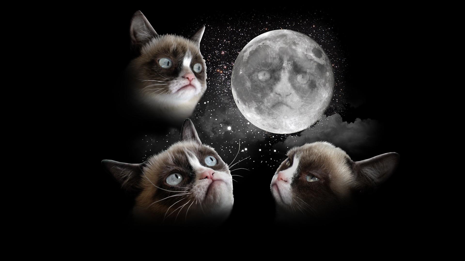 Black Grumpy Cat Pictures HD Wallpaper Black Grumpy Cat Pictures 1920x1080