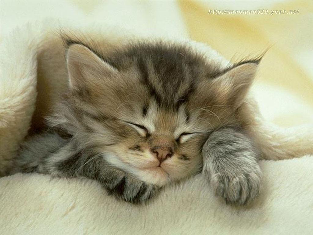 Kittens Cute Kitten Wallpaper 1024x768