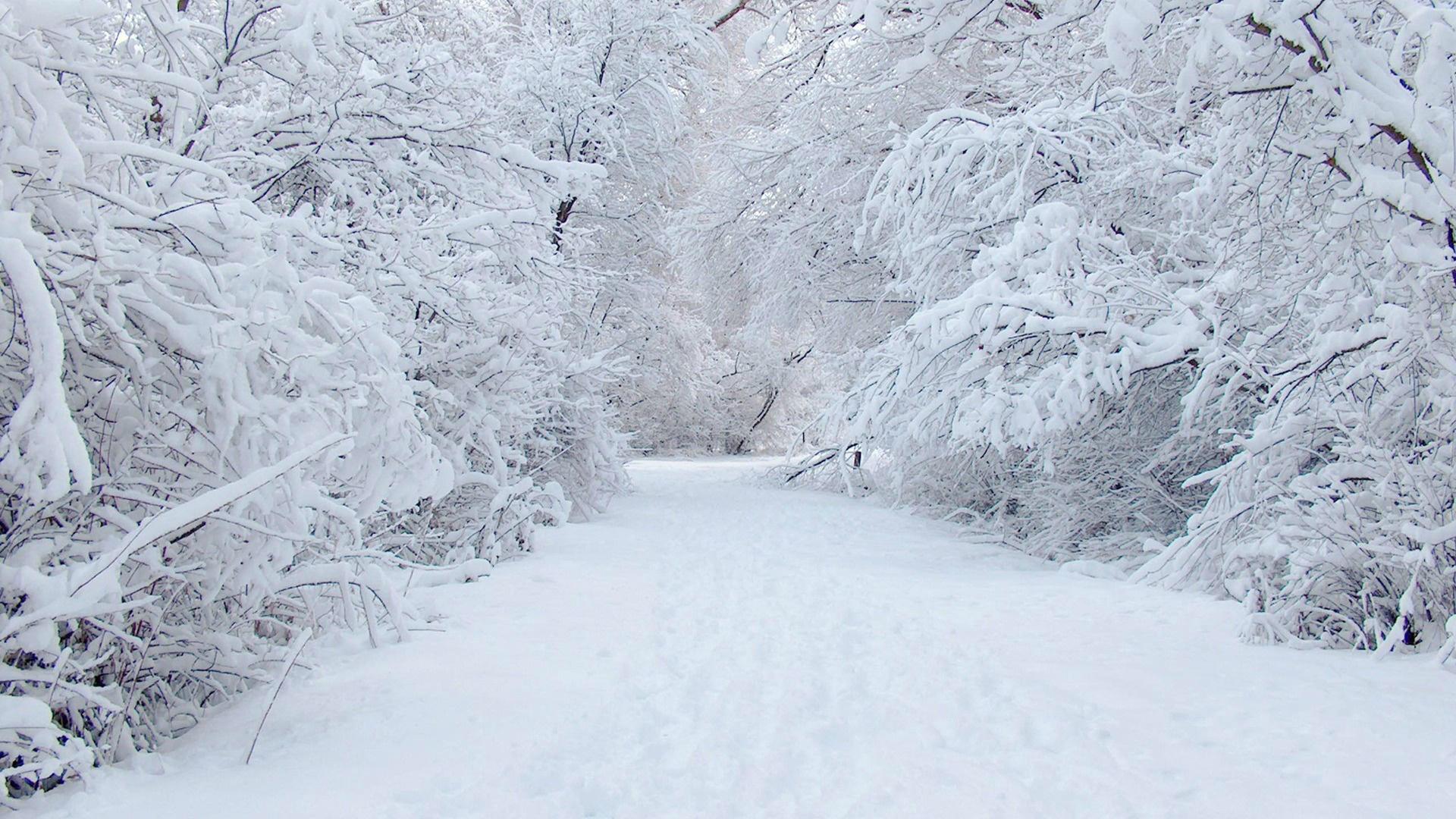 Winter Snow Wallpaper Hd 19201080 23180 HD Wallpaper Res 1920x1080 1920x1080