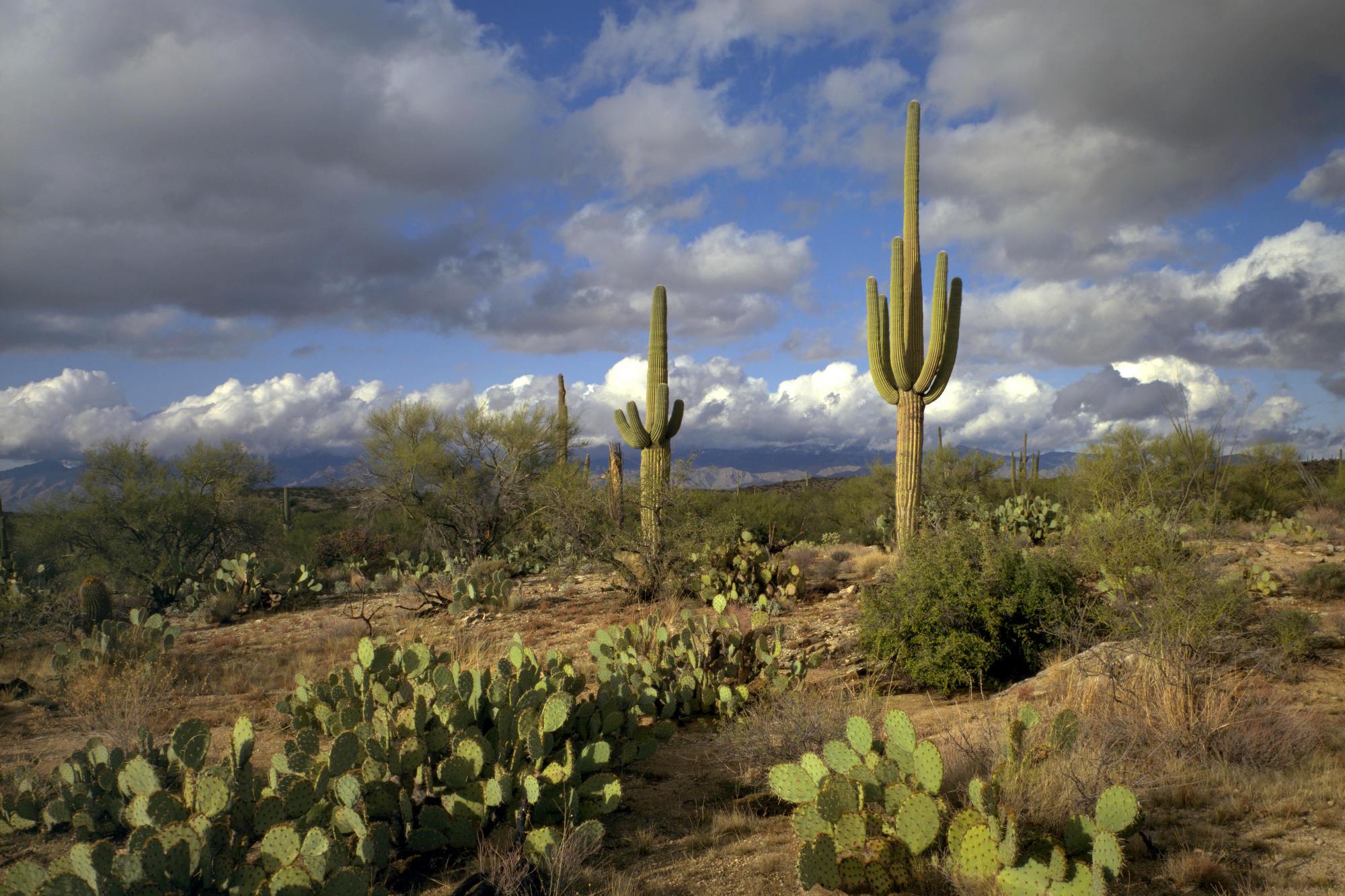 Arizona nice picture Arizona nice photo Arizona nice wallpaper 2000x1333