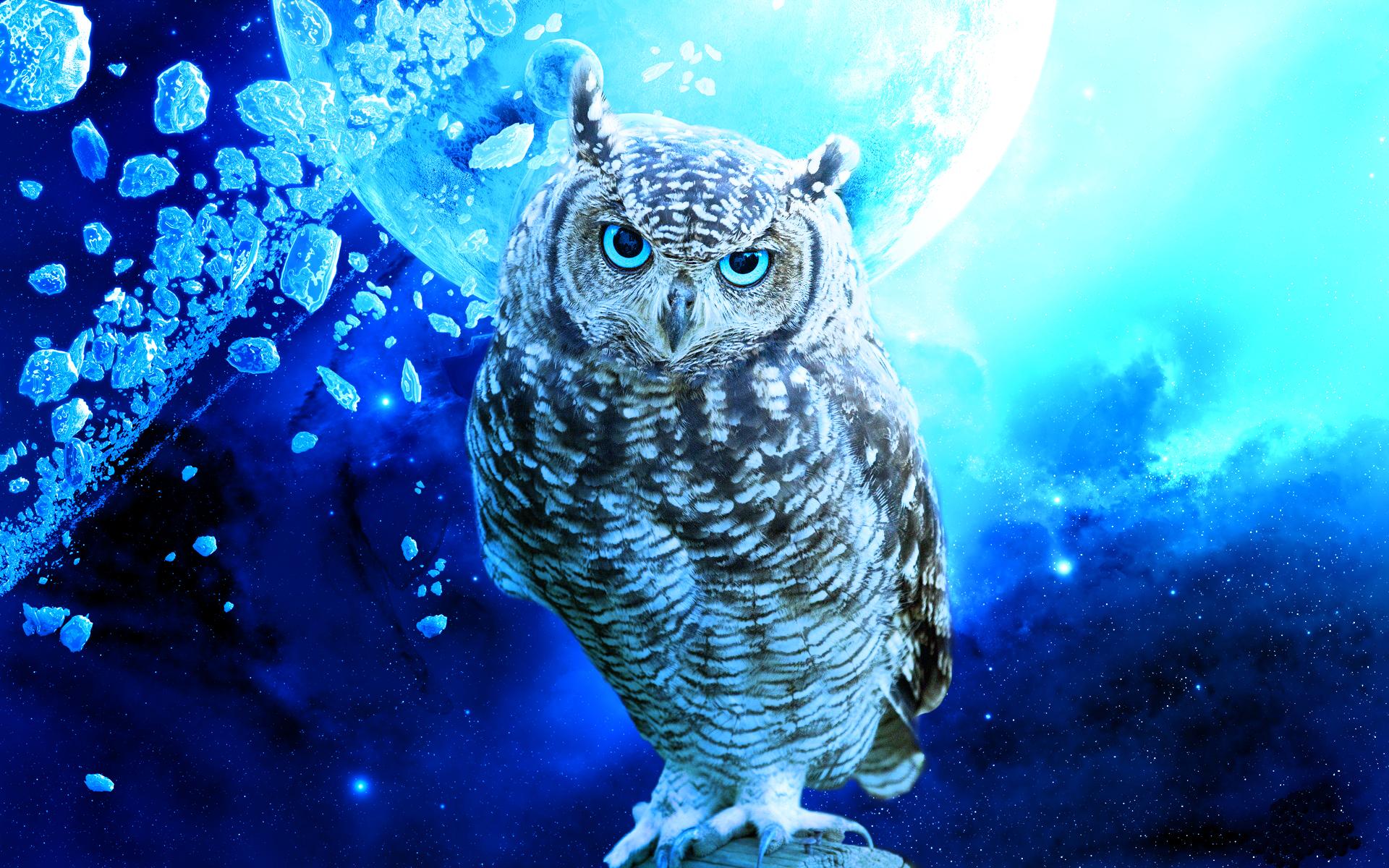 cute owl background wallpapersafari