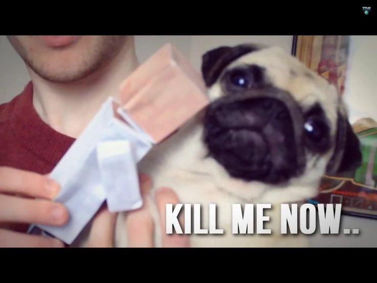 Pug hates dr Trayaurus Diamondminecart Pinterest Pug 736x552