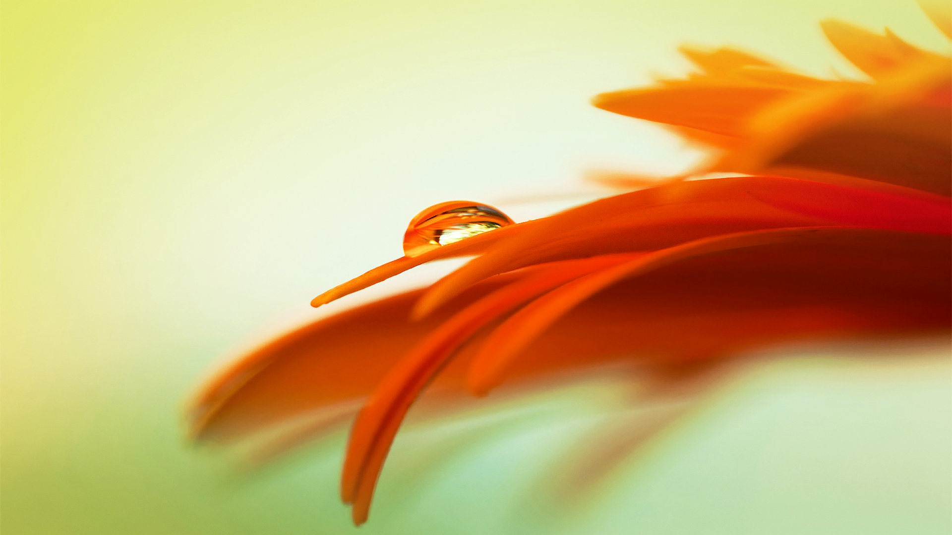 Orange wallpaper HD for Desktop   httpwallpapermonkeycom 1920x1080