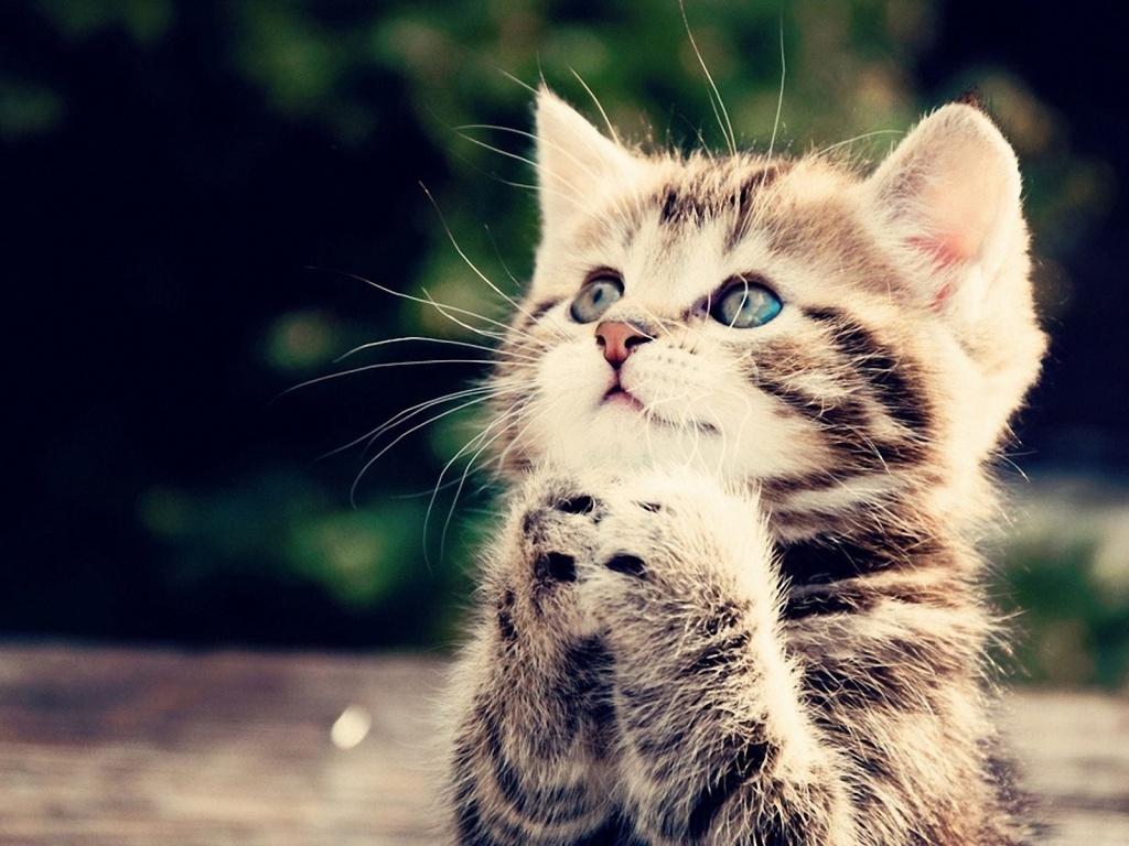 77 Free Cute Kitten Wallpapers On Wallpapersafari