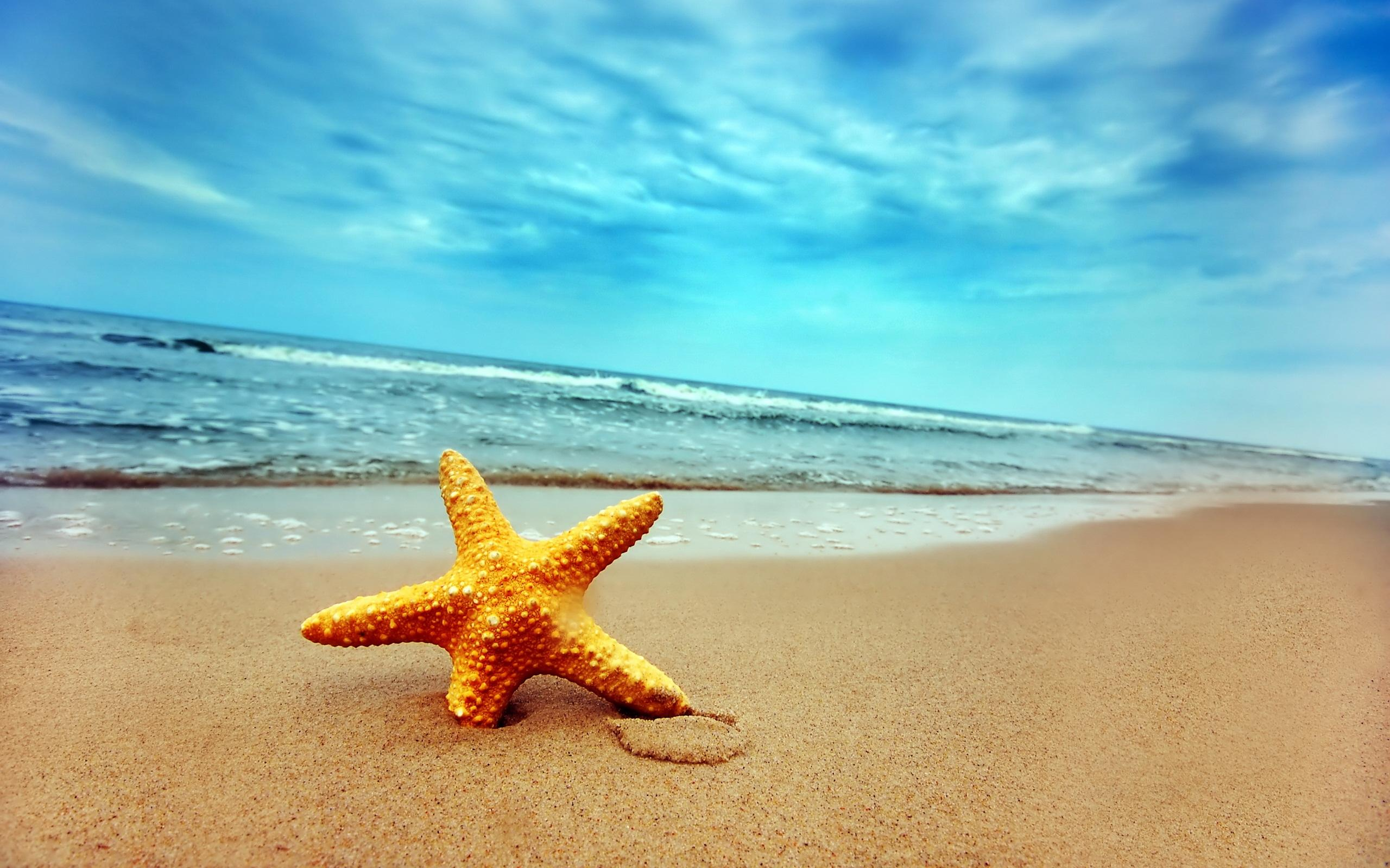 Starfish on Beach Desktop Wallpaper Background Desktop Wallpaper 2560x1600