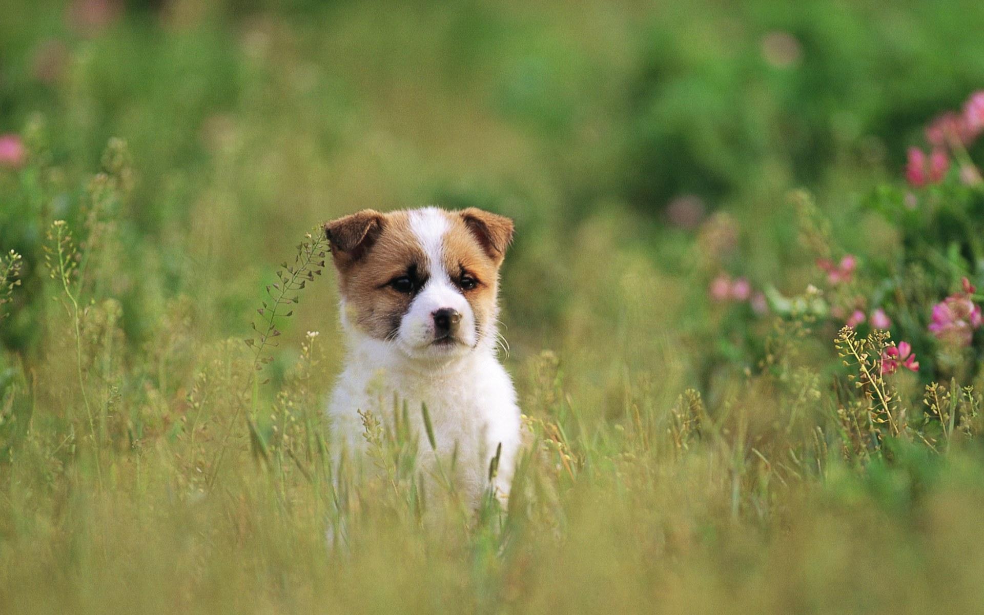 Pretty Dog wallpaper   Puppies Wallpaper 13906495 1920x1200