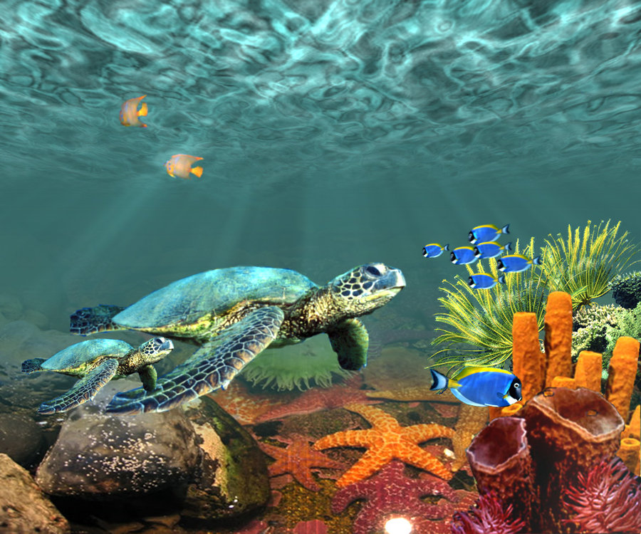 Underwater Photography Wallpaper Underwater Scen...
