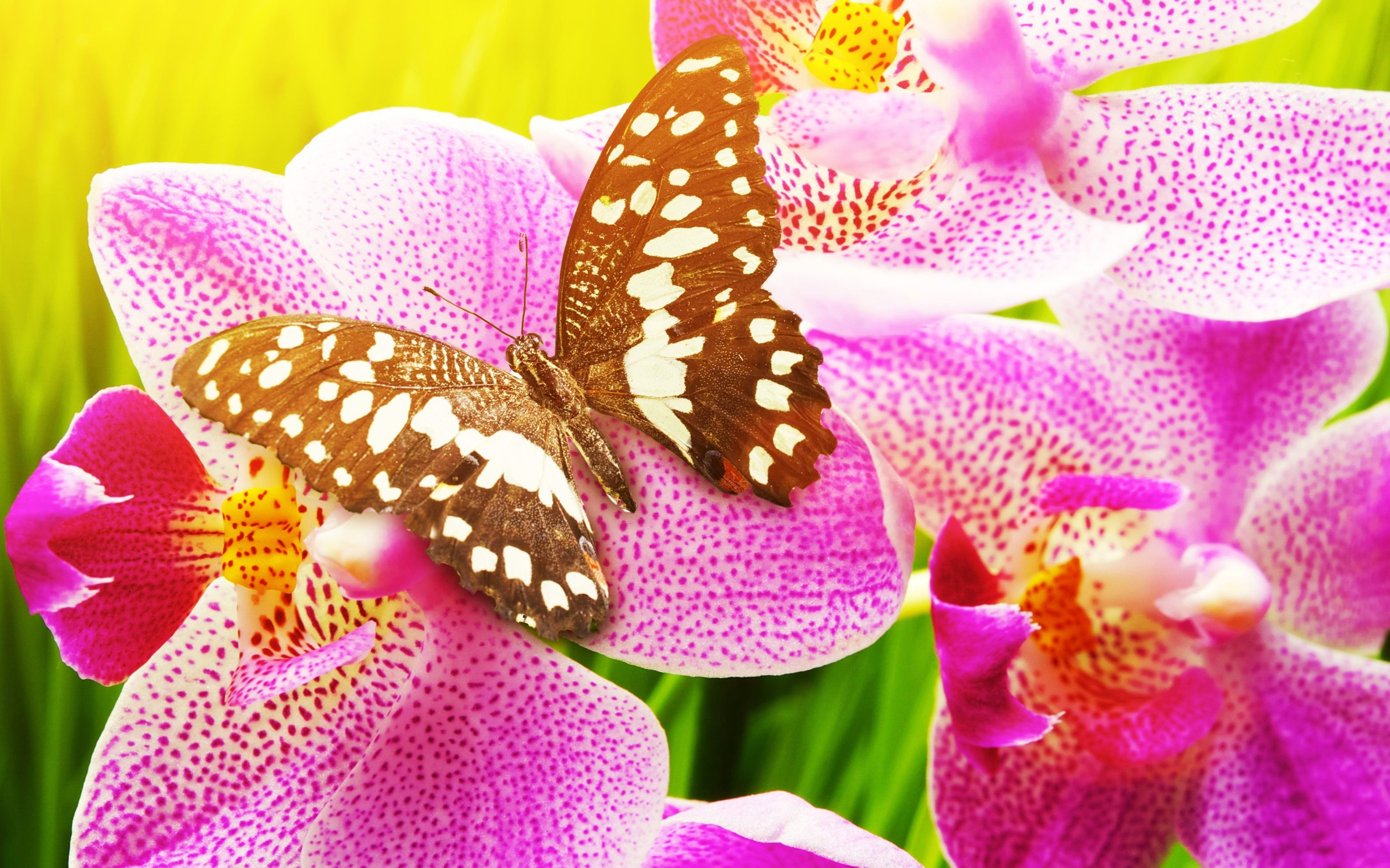 butterfly Wallpapers HD Desktop and Mobile Backgrounds 2880x1800