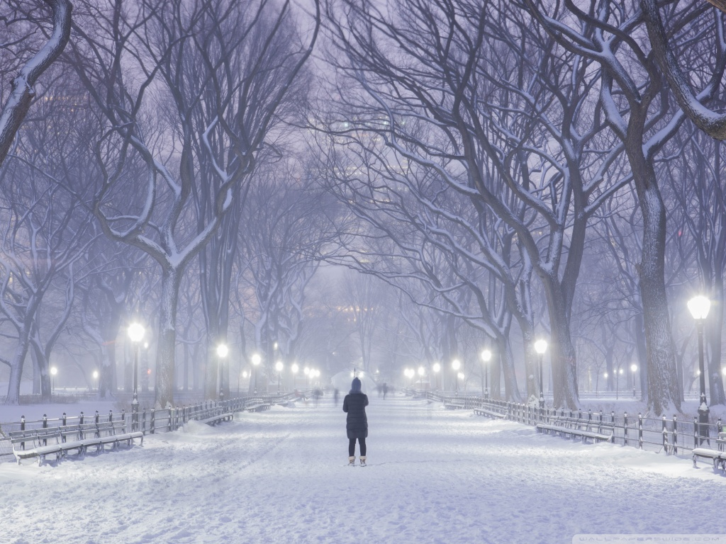 Central Park New York City Winter Background 4K HD Desktop 1024x768