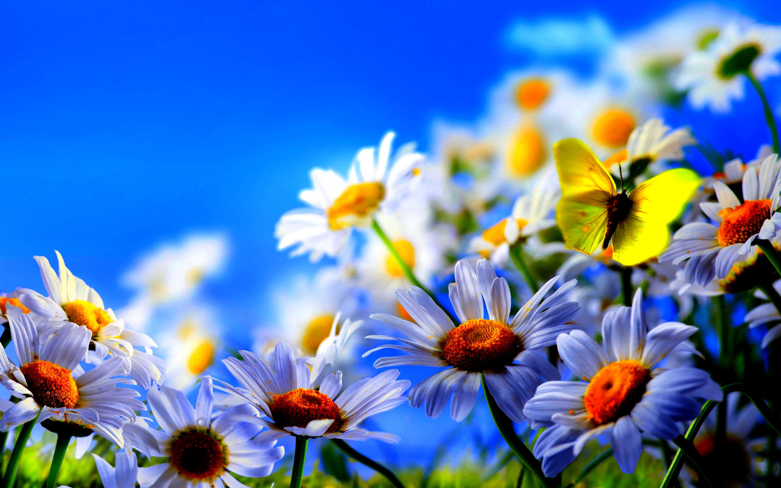 Home Nature Flowers Plants Spring flowers screensavers 2560x1600