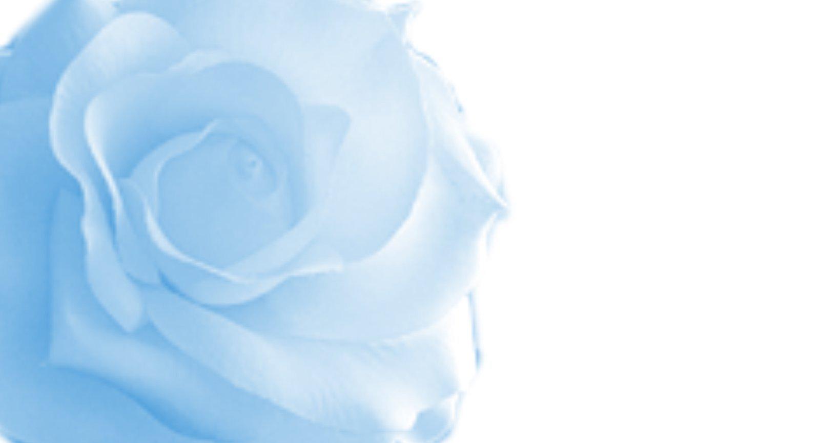 Blue Roses Background - WallpaperSafari