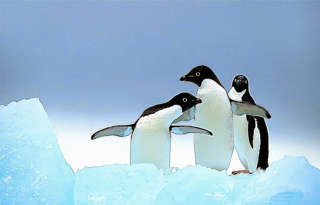 Cute Penguins Animals Wallpaper Wallpapers Gallery 1092x698