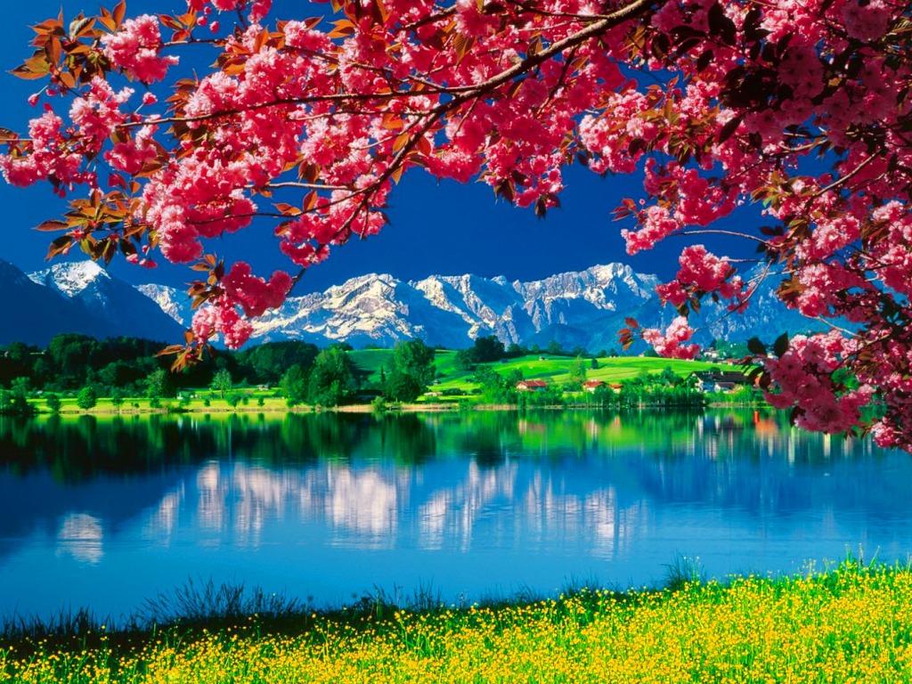 Nature Wallpaper   Daydreaming Wallpaper 34811098 1024x768